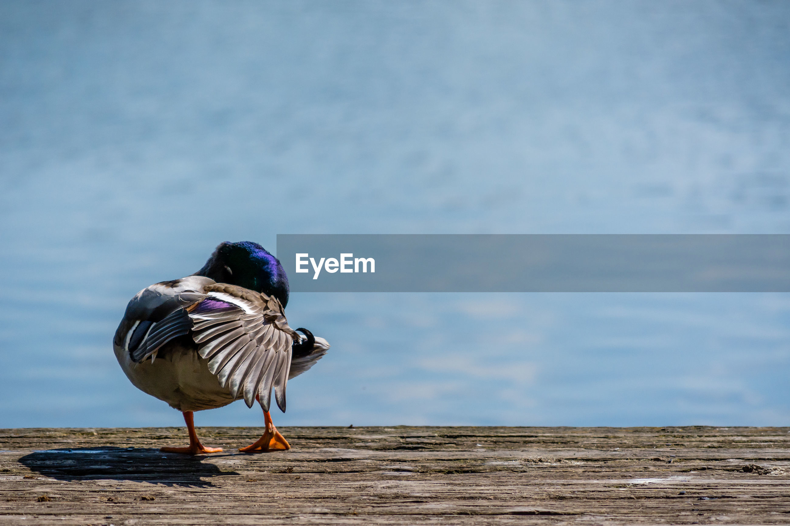 Duck perching on sand against sky