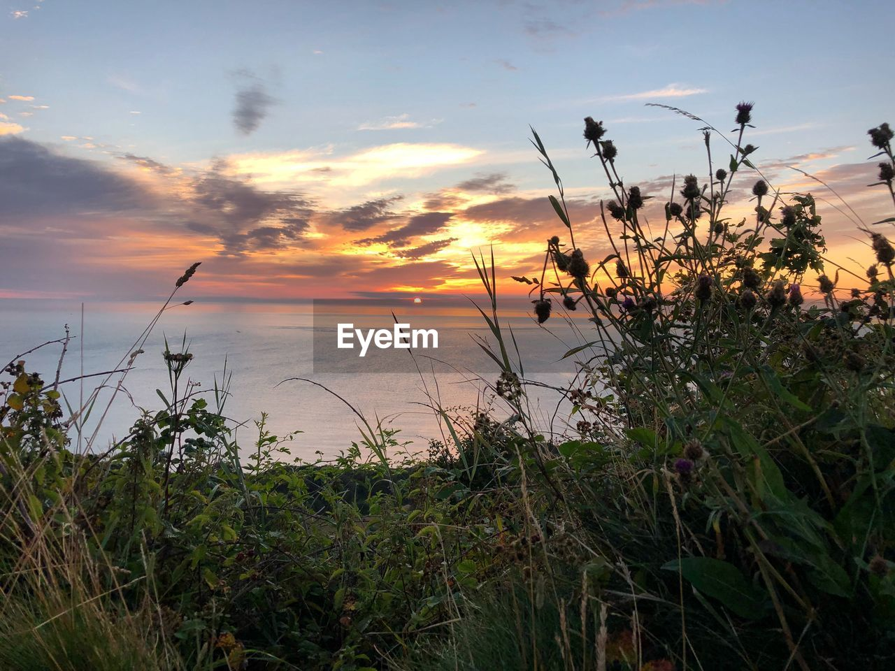 sky, sunset, plant, beauty in nature, cloud - sky, water, tranquility, growth, sea, tranquil scene, scenics - nature, nature, horizon over water, horizon, land, no people, orange color, beach, grass, outdoors, timothy grass