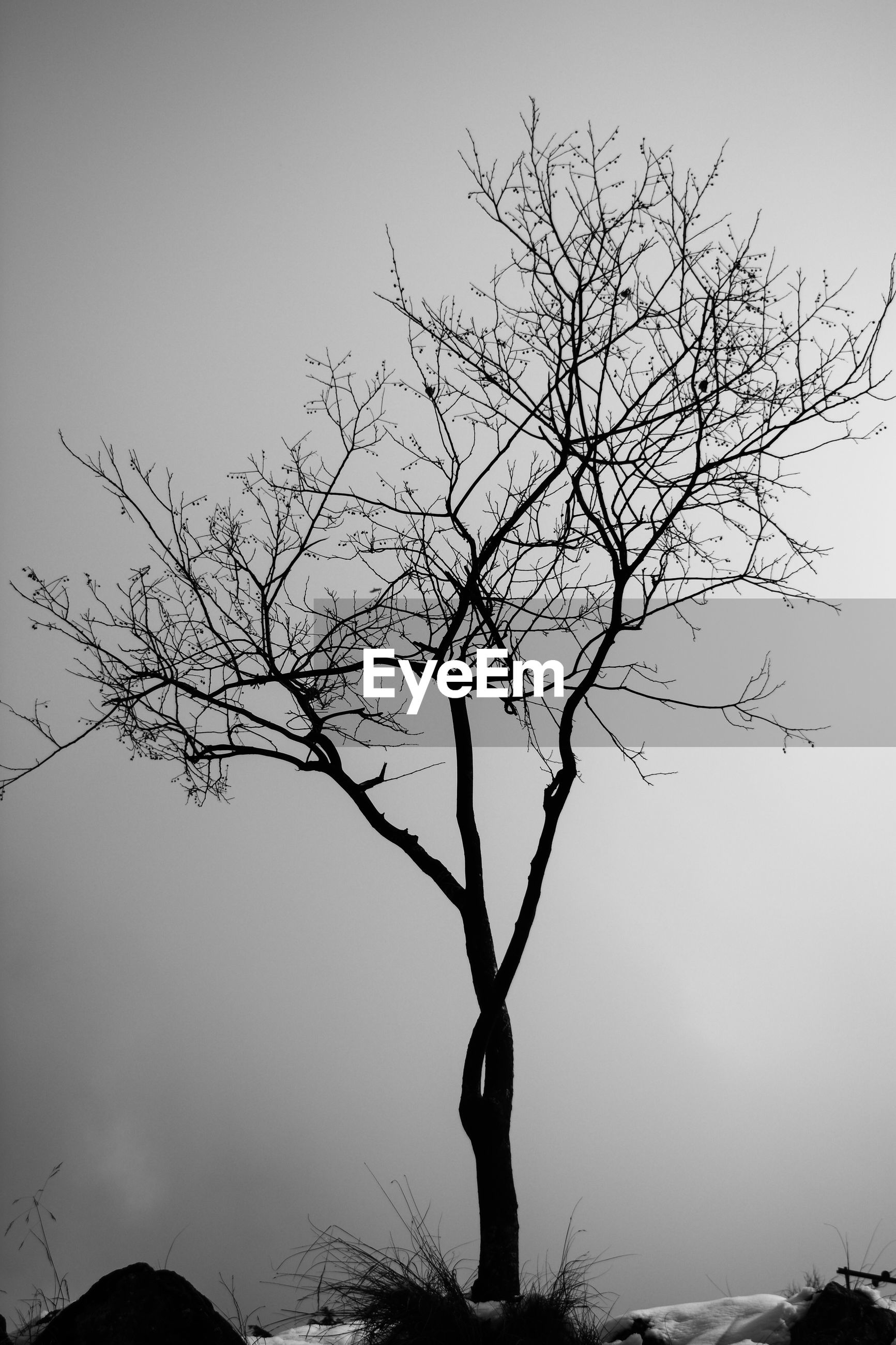 LOW ANGLE VIEW OF SILHOUETTE BARE TREE AGAINST CLEAR SKY