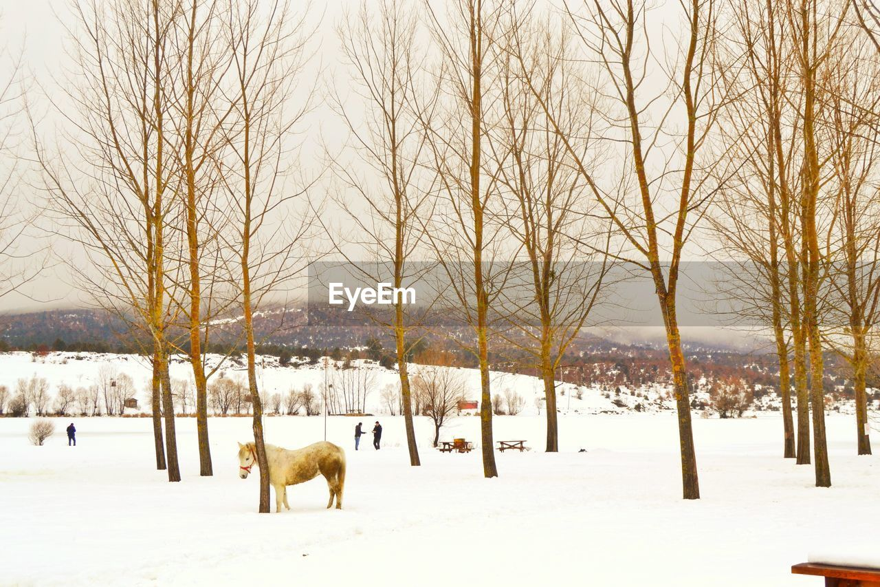 Horse On Snow Covered Landscape Against Bare Trees