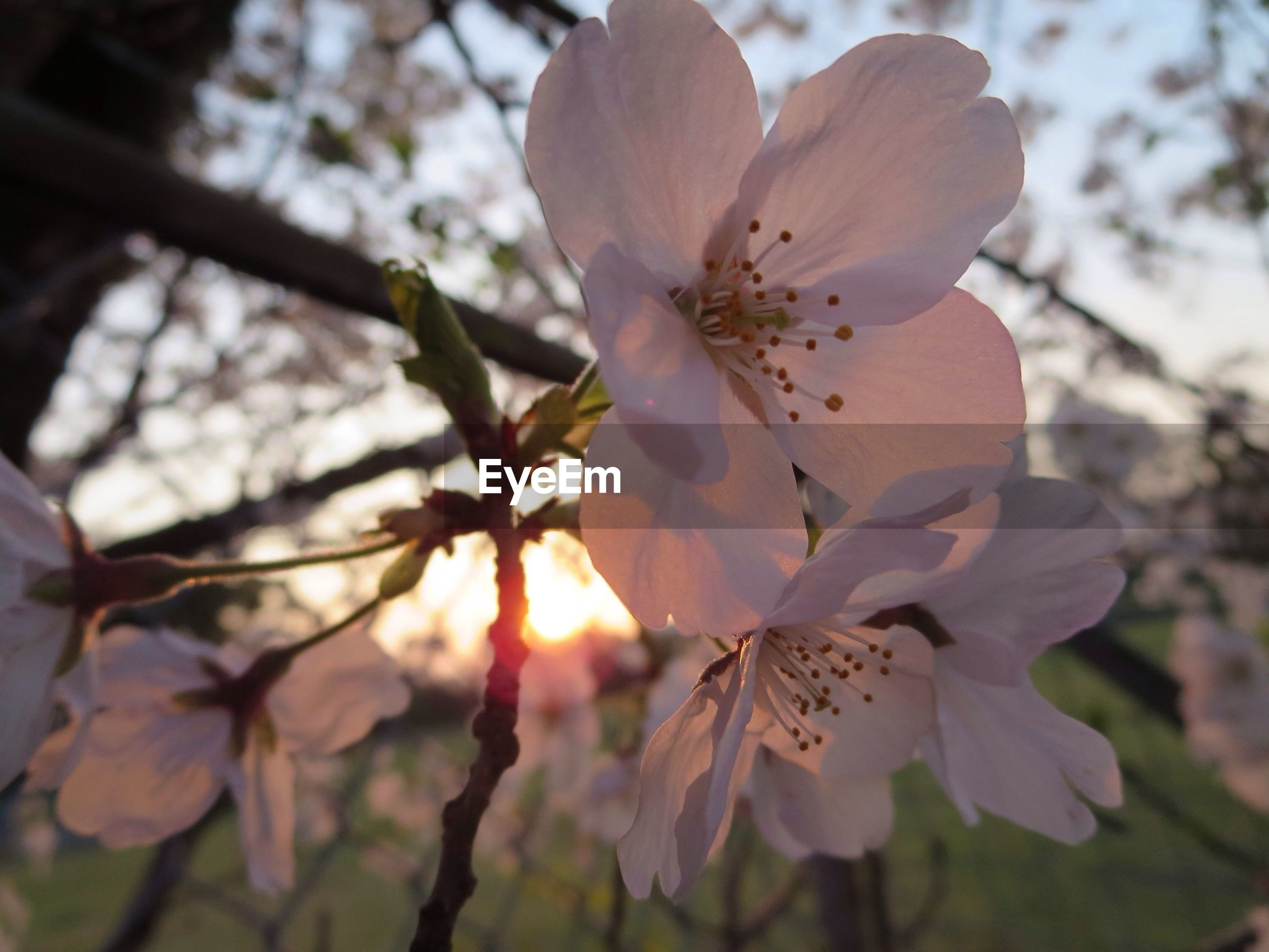 flower, freshness, fragility, petal, growth, low angle view, beauty in nature, nature, branch, focus on foreground, close-up, tree, flower head, blooming, in bloom, blossom, sunlight, stamen, pollen, day