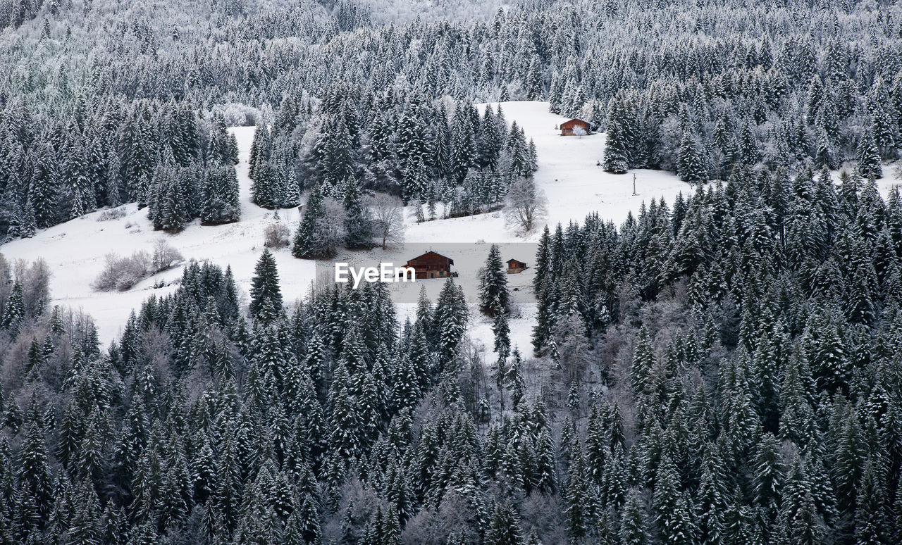 High Angle View Of Snow Covered Forest