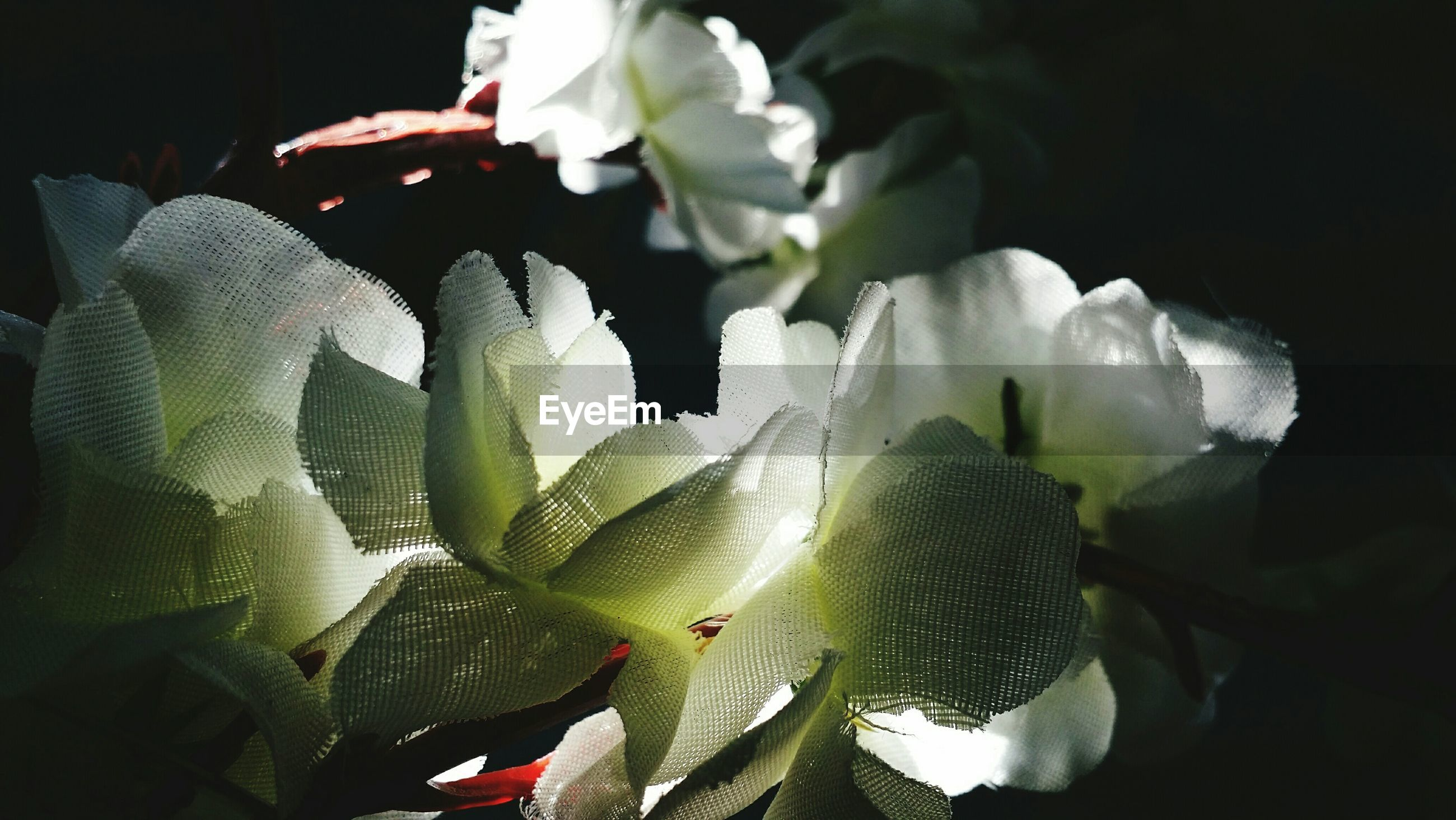 flower, freshness, petal, fragility, white color, leaf, flower head, growth, plant, close-up, beauty in nature, nature, indoors, blooming, no people, focus on foreground, high angle view, day, stem