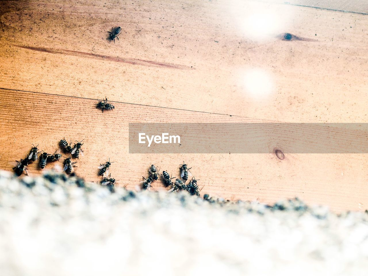 High angle view of insects
