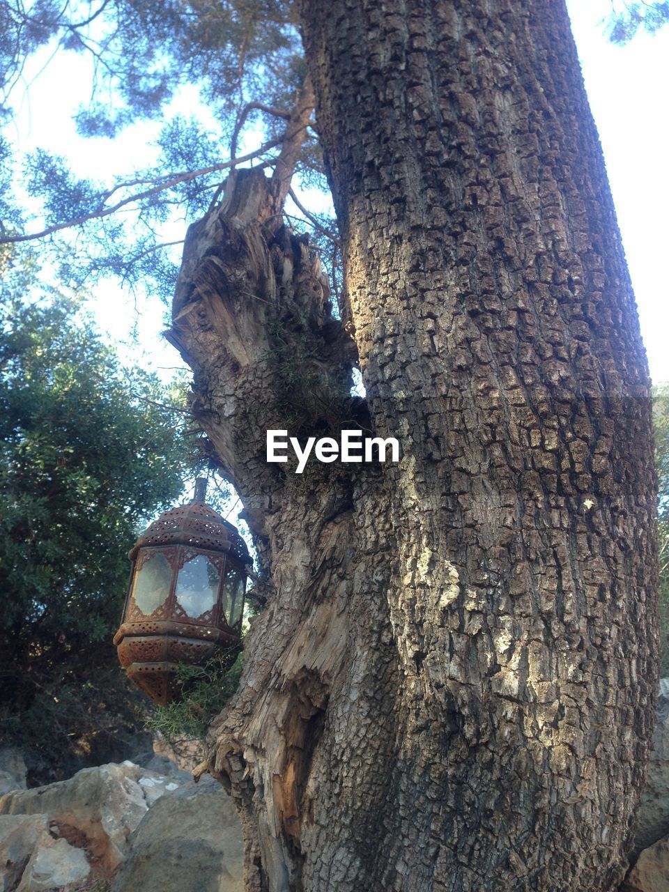 tree trunk, tree, no people, nature, day, growth, low angle view, outdoors, branch, sky