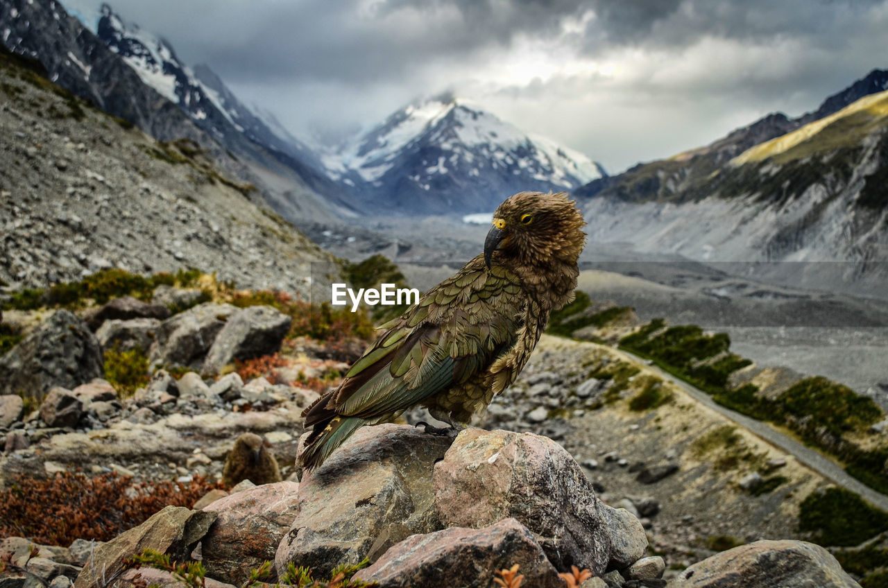 Bird Perching On Rock Against Mountains During Winter