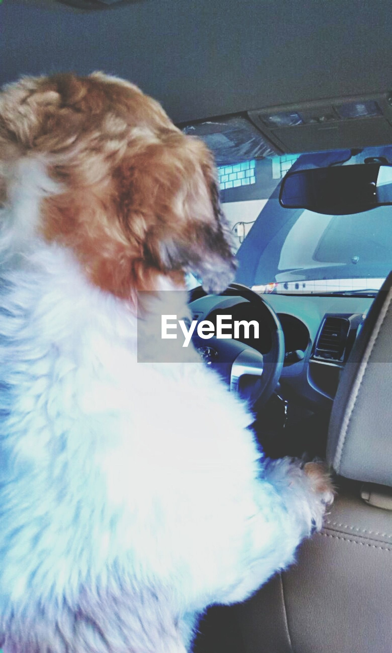 indoors, pets, domestic animals, one animal, transportation, animal themes, mammal, mode of transport, car, land vehicle, vehicle interior, dog, car interior, relaxation, domestic cat, part of, sitting, close-up, cat, resting