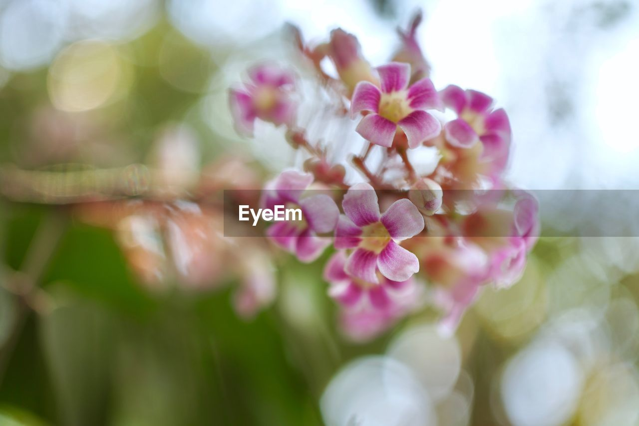 flower, fragility, petal, beauty in nature, nature, pink color, close-up, growth, freshness, flower head, focus on foreground, plant, day, blooming, outdoors, no people