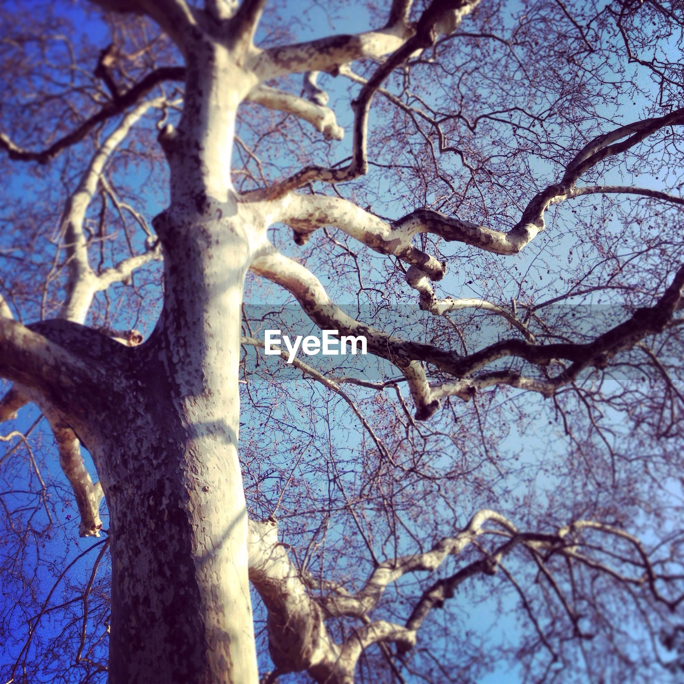 branch, tree, bare tree, low angle view, tree trunk, nature, tranquility, sky, beauty in nature, growth, backgrounds, blue, outdoors, day, no people, clear sky, full frame, scenics, close-up, twig