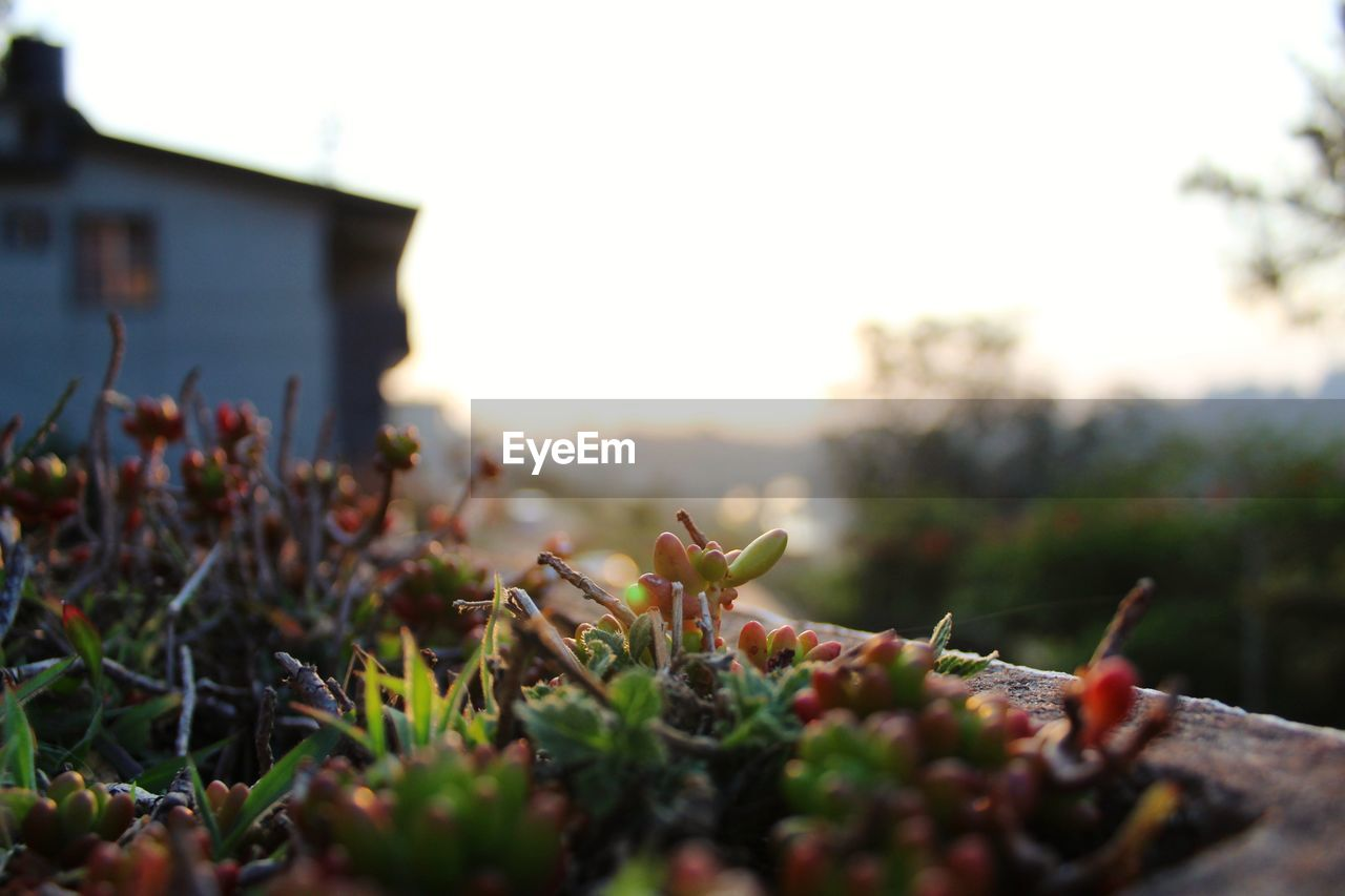 growth, nature, outdoors, no people, plant, day, clear sky, beauty in nature, close-up, freshness, sky