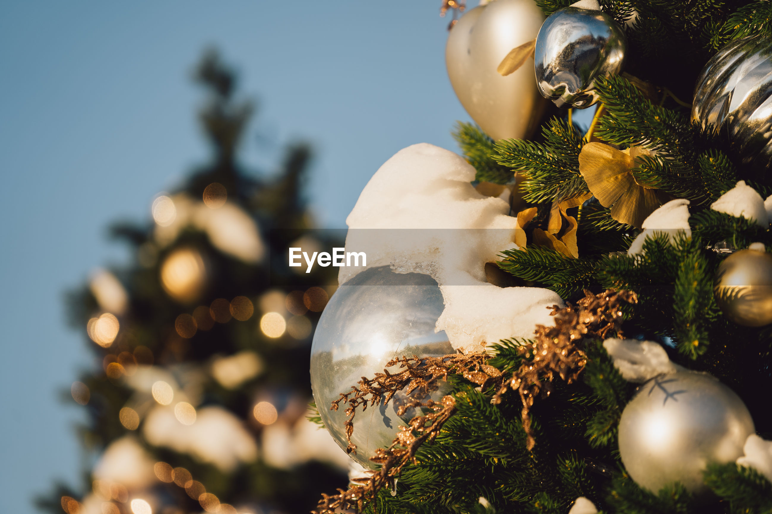 Close-up of christmas tree against sky