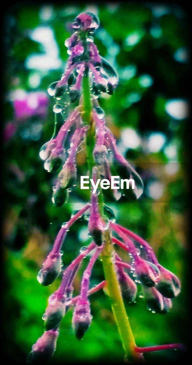 growth, nature, focus on foreground, no people, green color, beauty in nature, close-up, plant, fragility, flower, freshness, outdoors, tree, day, flower head