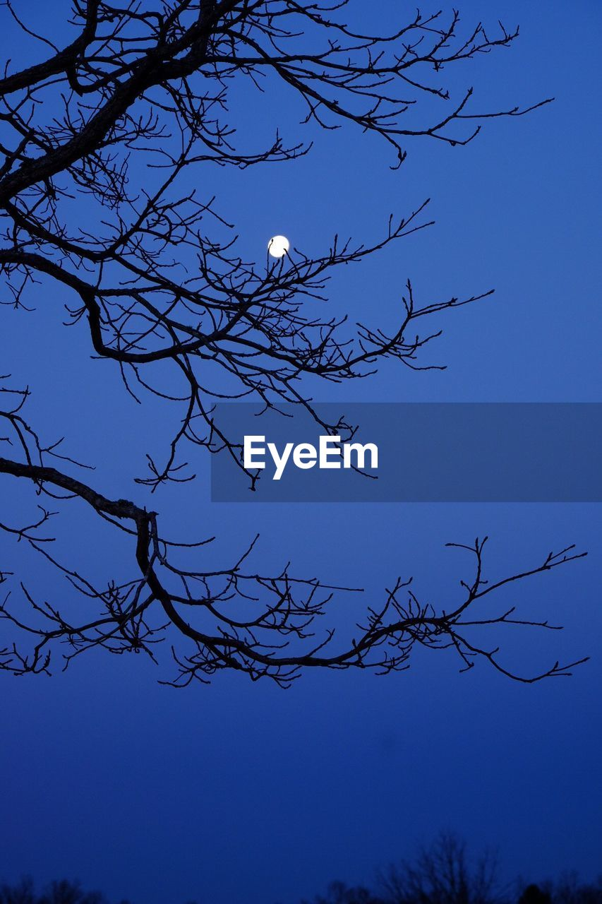low angle view, branch, moon, blue, bare tree, nature, tree, beauty in nature, clear sky, outdoors, silhouette, no people, sky, day, growth, half moon, bird, astronomy