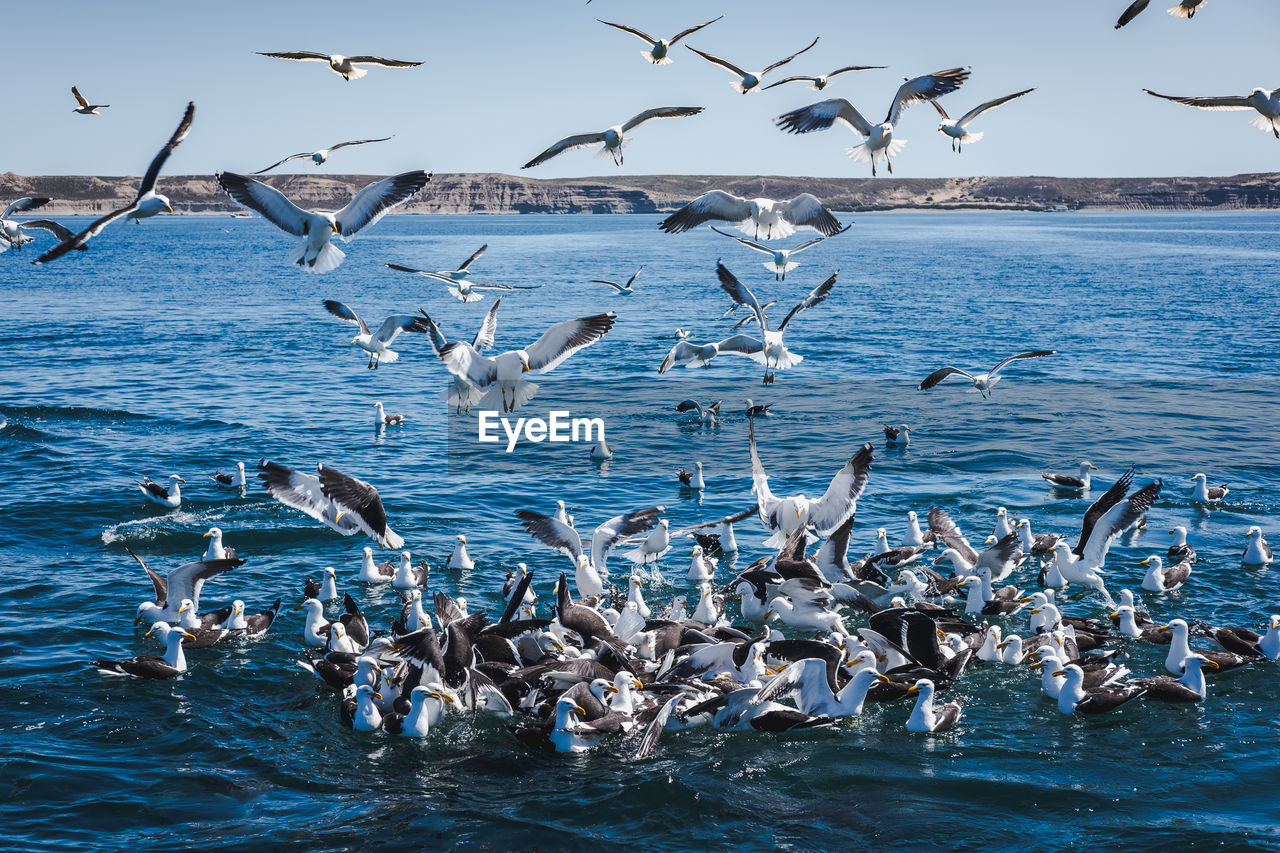 animals in the wild, animal wildlife, group of animals, large group of animals, vertebrate, animal, water, animal themes, bird, sea, flock of birds, flying, seagull, sky, spread wings, beauty in nature, mid-air, no people, nature, horizon over water
