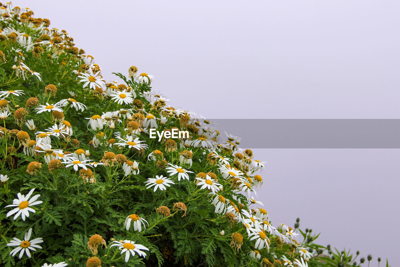 plant, sky, growth, beauty in nature, freshness, flower, clear sky, flowering plant, low angle view, nature, tree, copy space, no people, green color, day, fragility, vulnerability, tranquility, outdoors, yellow, flower head