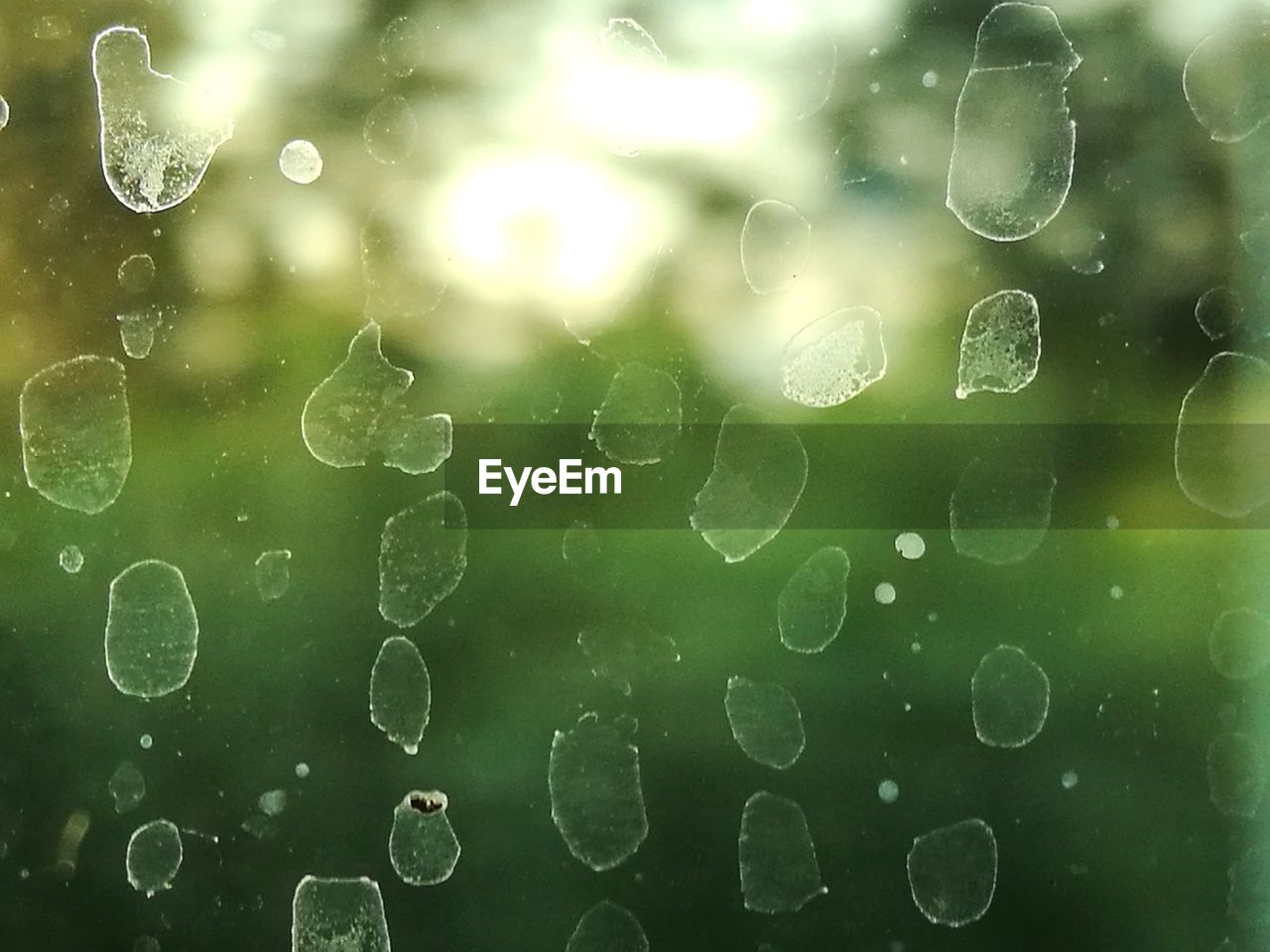 water, wet, drop, close-up, no people, full frame, nature, transparent, backgrounds, day, glass - material, bubble, window, green color, rain, outdoors, beauty in nature, raindrop, rainy season, purity