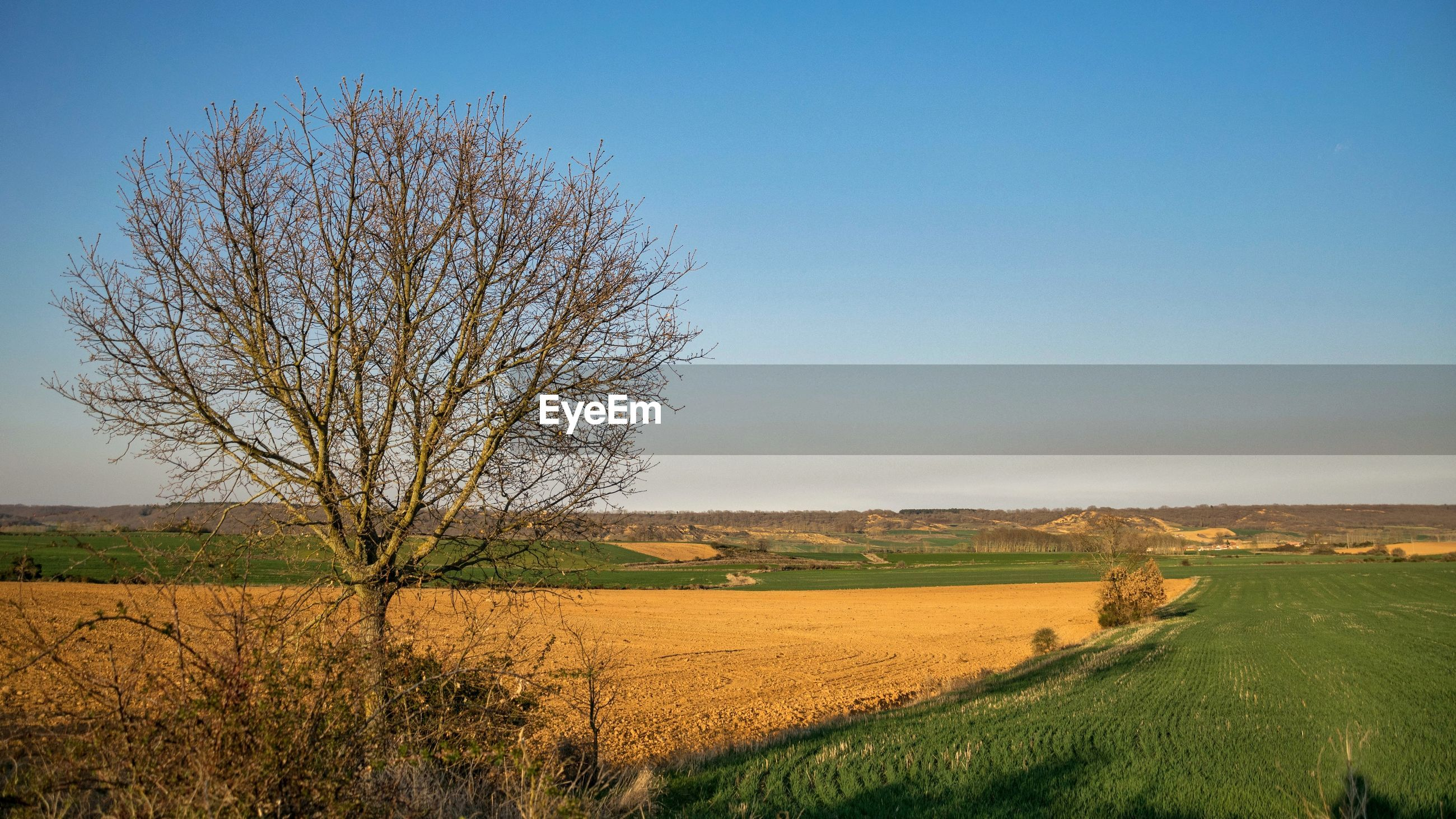 landscape, bare tree, field, beauty in nature, nature, tranquil scene, tranquility, scenics, tree, agriculture, day, no people, blue, rural scene, clear sky, outdoors, grass, sky
