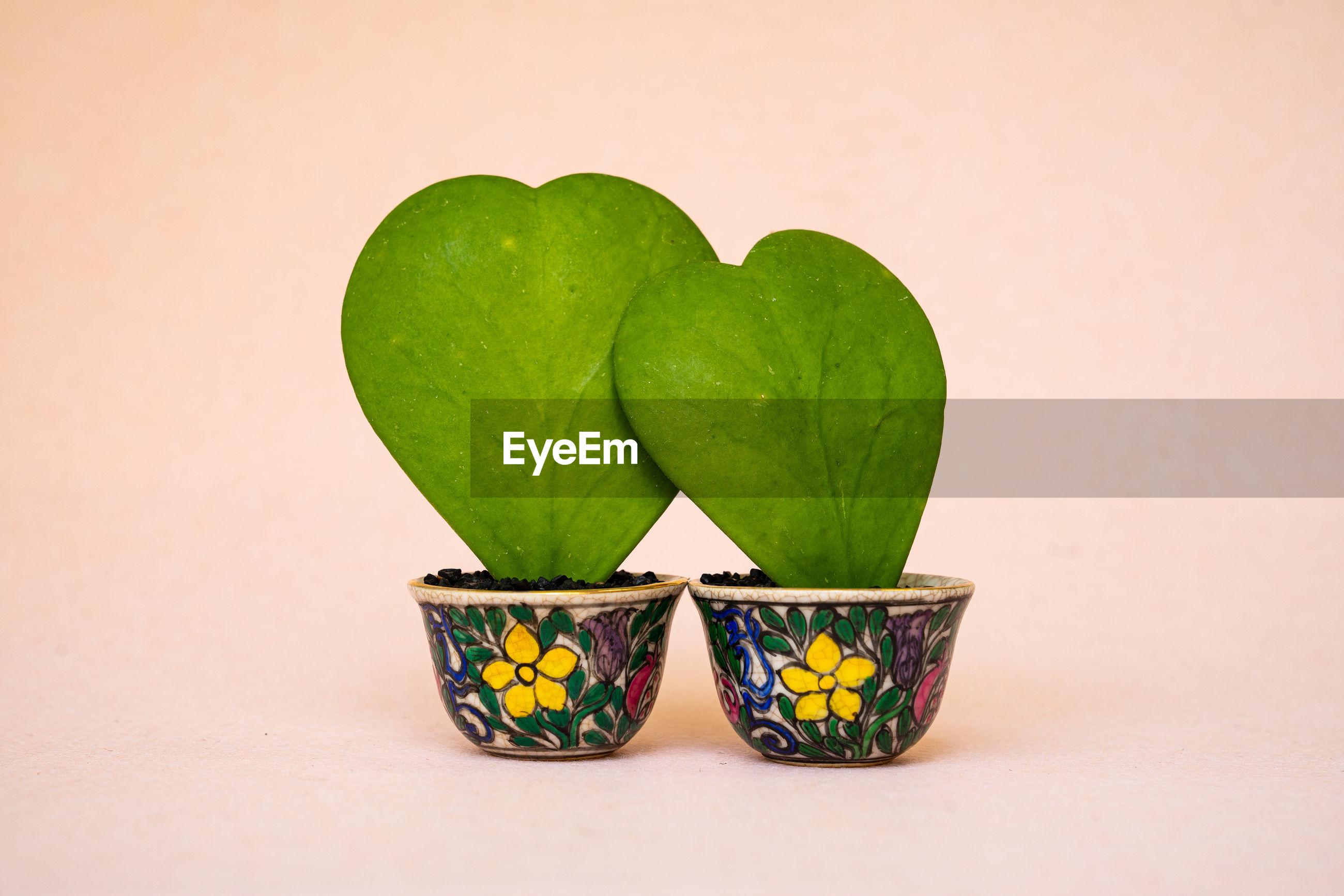 Two hoya kerri leaves on the beautiful small cups