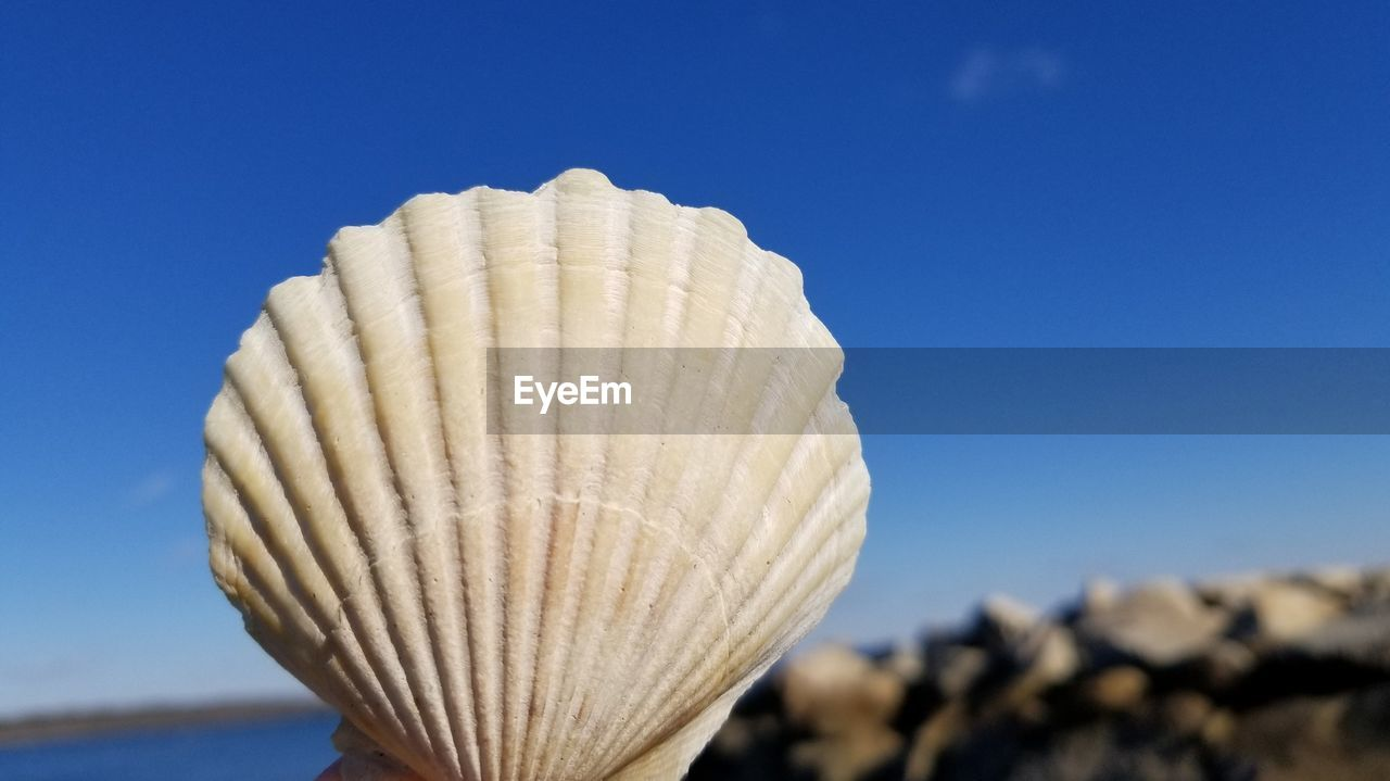 focus on foreground, blue, close-up, sky, nature, no people, day, clear sky, sunlight, pattern, white color, low angle view, copy space, outdoors, architecture, natural pattern, shell, built structure, seashell, animal shell