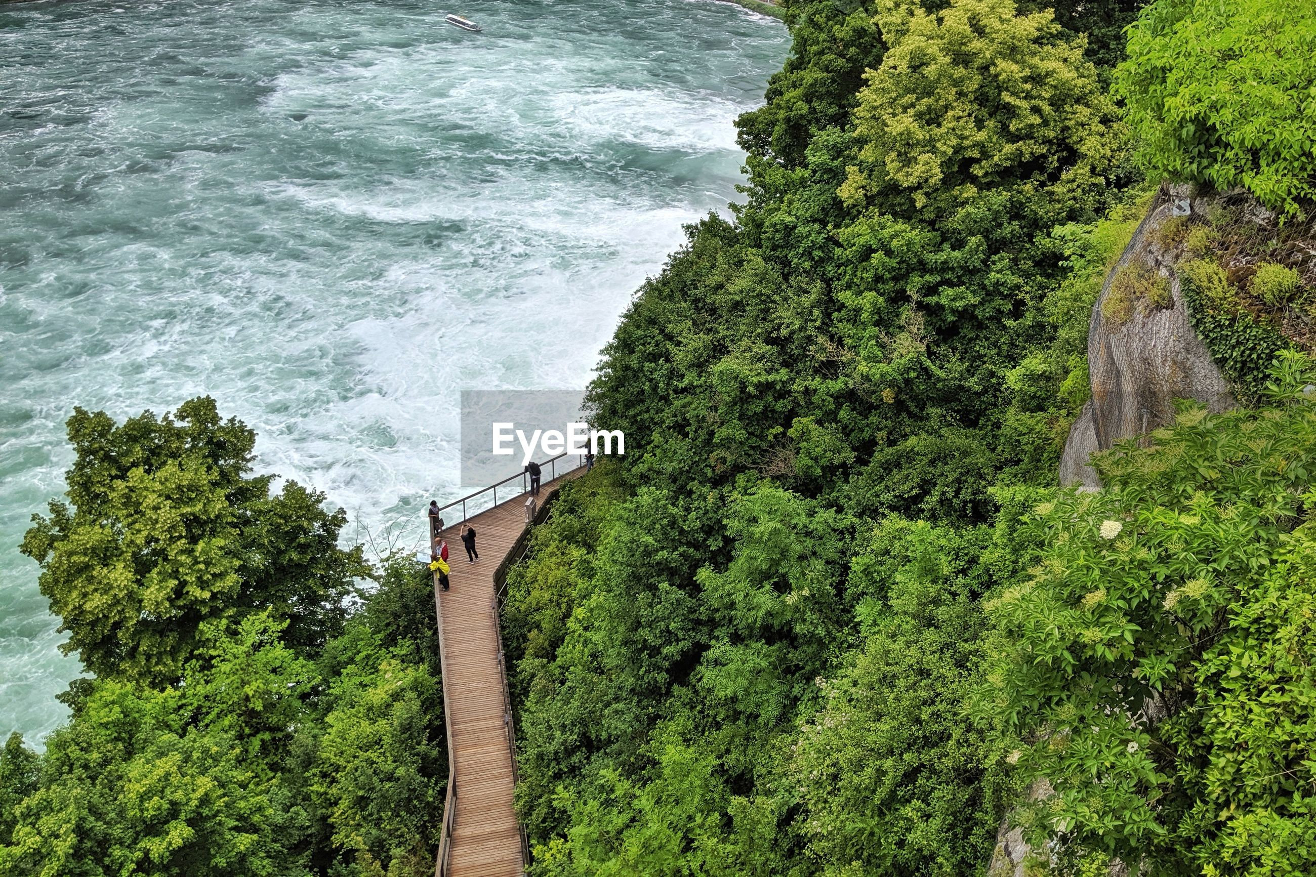HIGH ANGLE VIEW OF TREES GROWING ON SEA