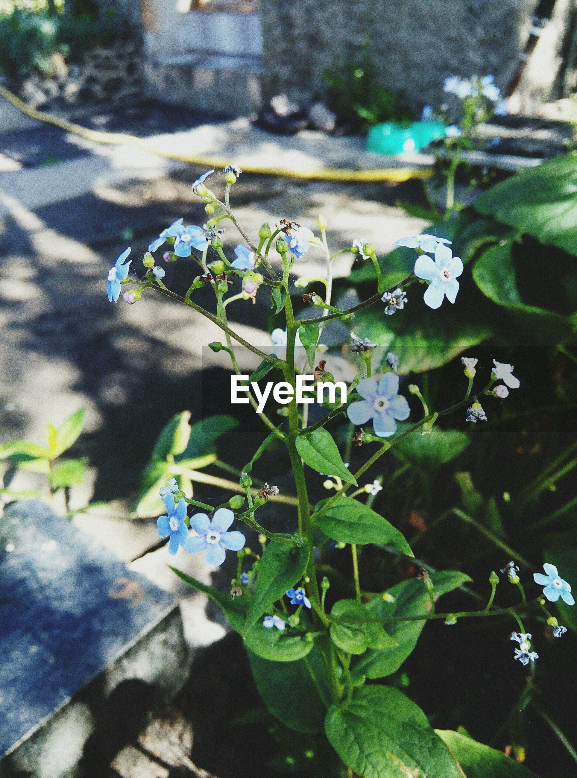 flower, plant, growth, fragility, leaf, day, beauty in nature, nature, freshness, green color, outdoors, high angle view, no people, petal, close-up, flower head, blooming