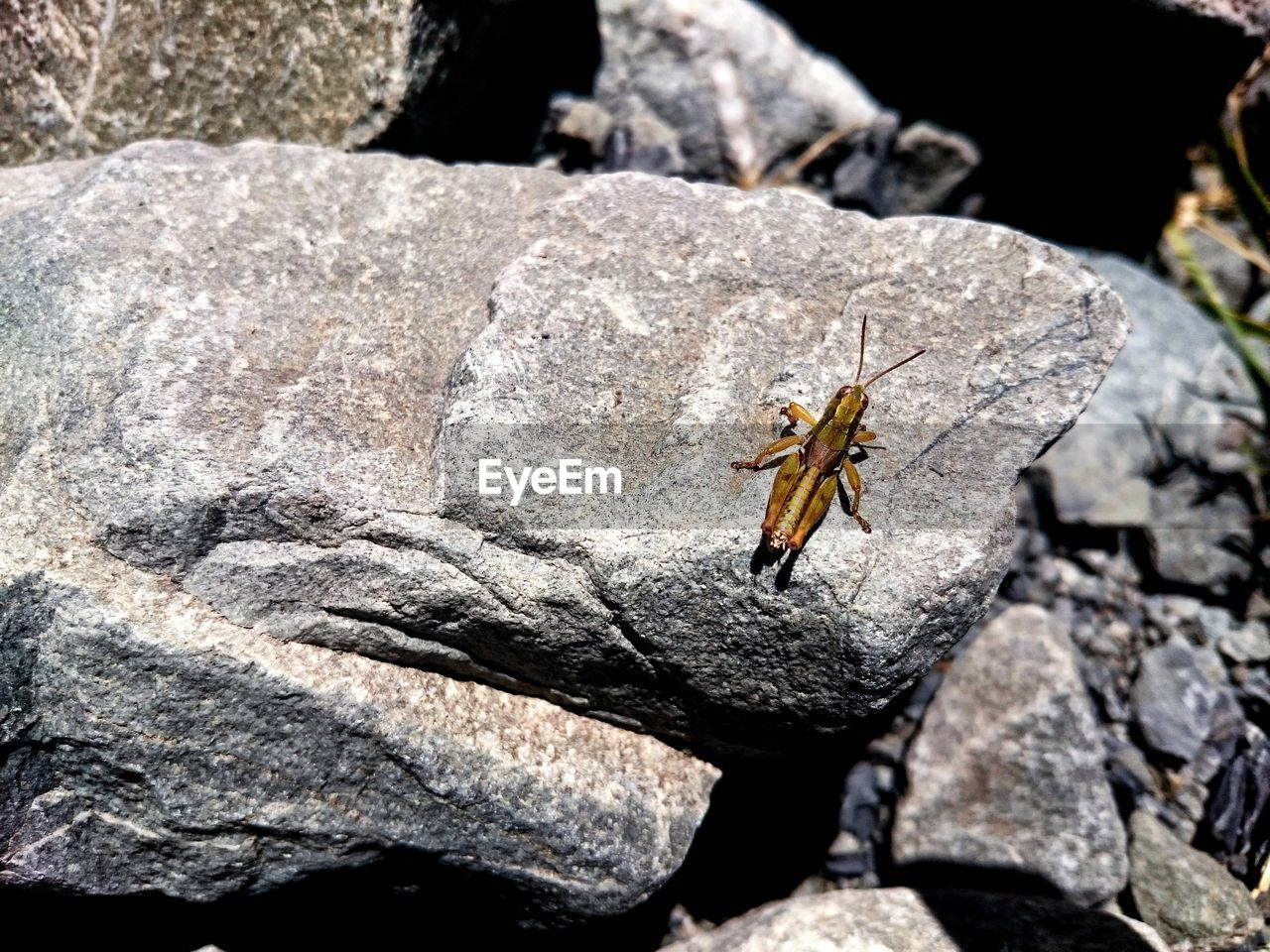 animals in the wild, animal wildlife, animal themes, one animal, animal, invertebrate, insect, rock, rock - object, solid, close-up, no people, day, nature, outdoors, textured, sunlight, focus on foreground, selective focus, arthropod