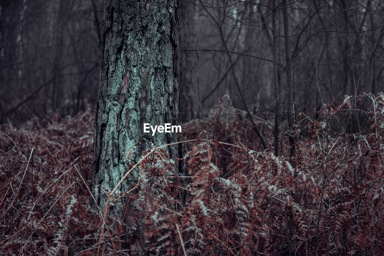 tree, forest, land, trunk, plant, tree trunk, nature, woodland, bare tree, no people, cold temperature, tranquility, non-urban scene, landscape, branch, winter, scenics - nature, snow, beauty in nature, outdoors