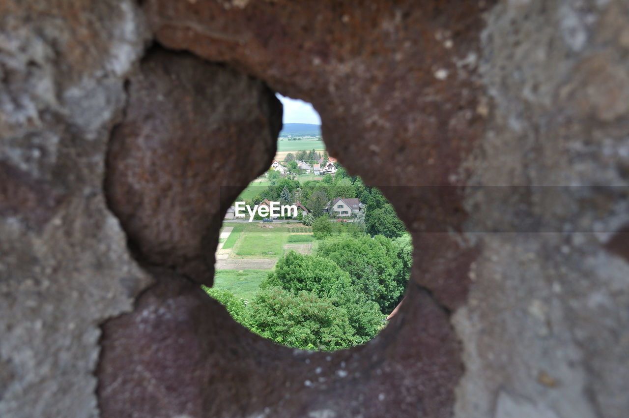 plant, no people, day, growth, nature, architecture, green color, solid, built structure, rock, close-up, focus on foreground, rock - object, outdoors, tree, hole, wall - building feature, selective focus, wall, textured