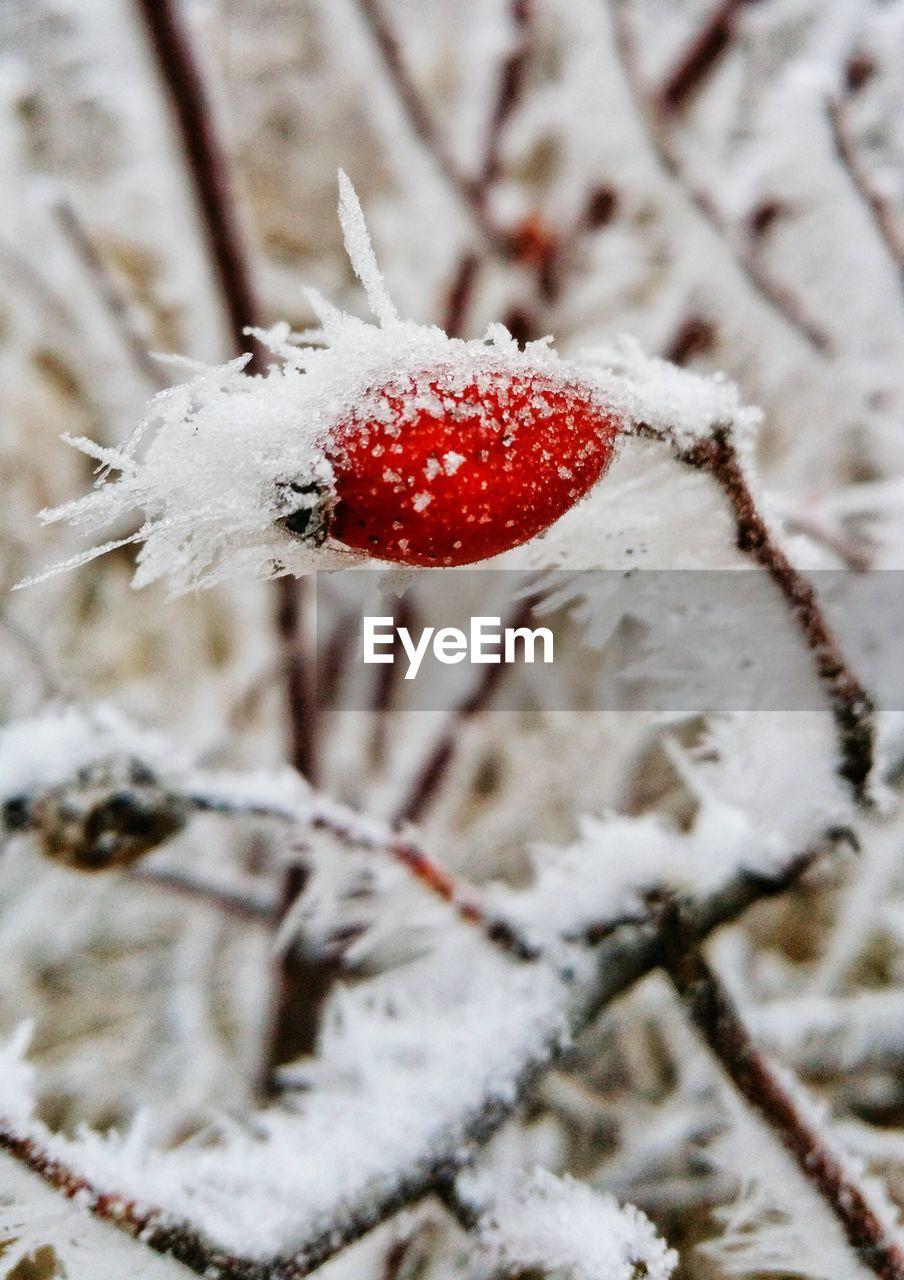 HIGH ANGLE VIEW OF ICE CREAM ON SNOW