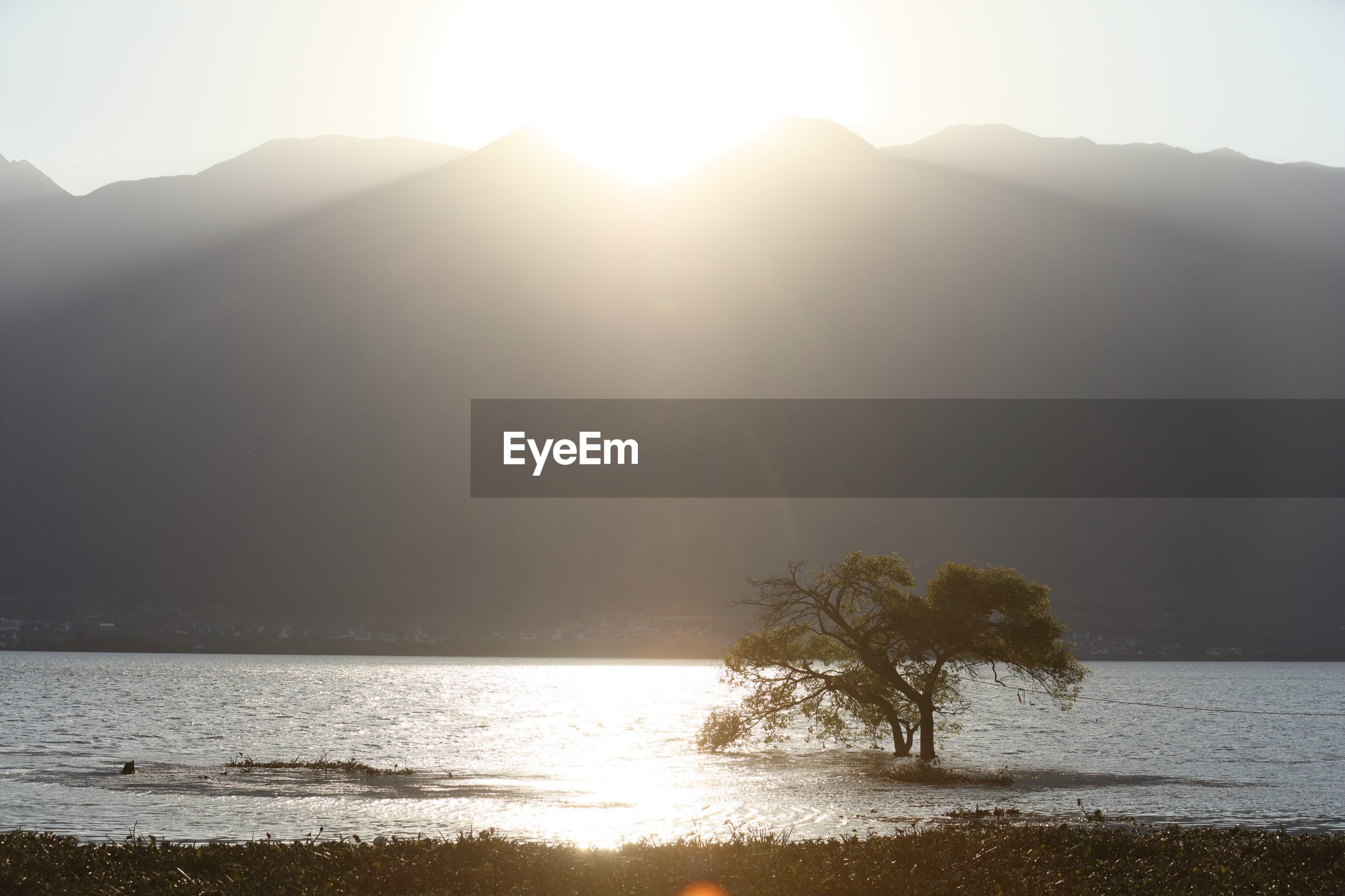 View tree in lake against moutains at sunset