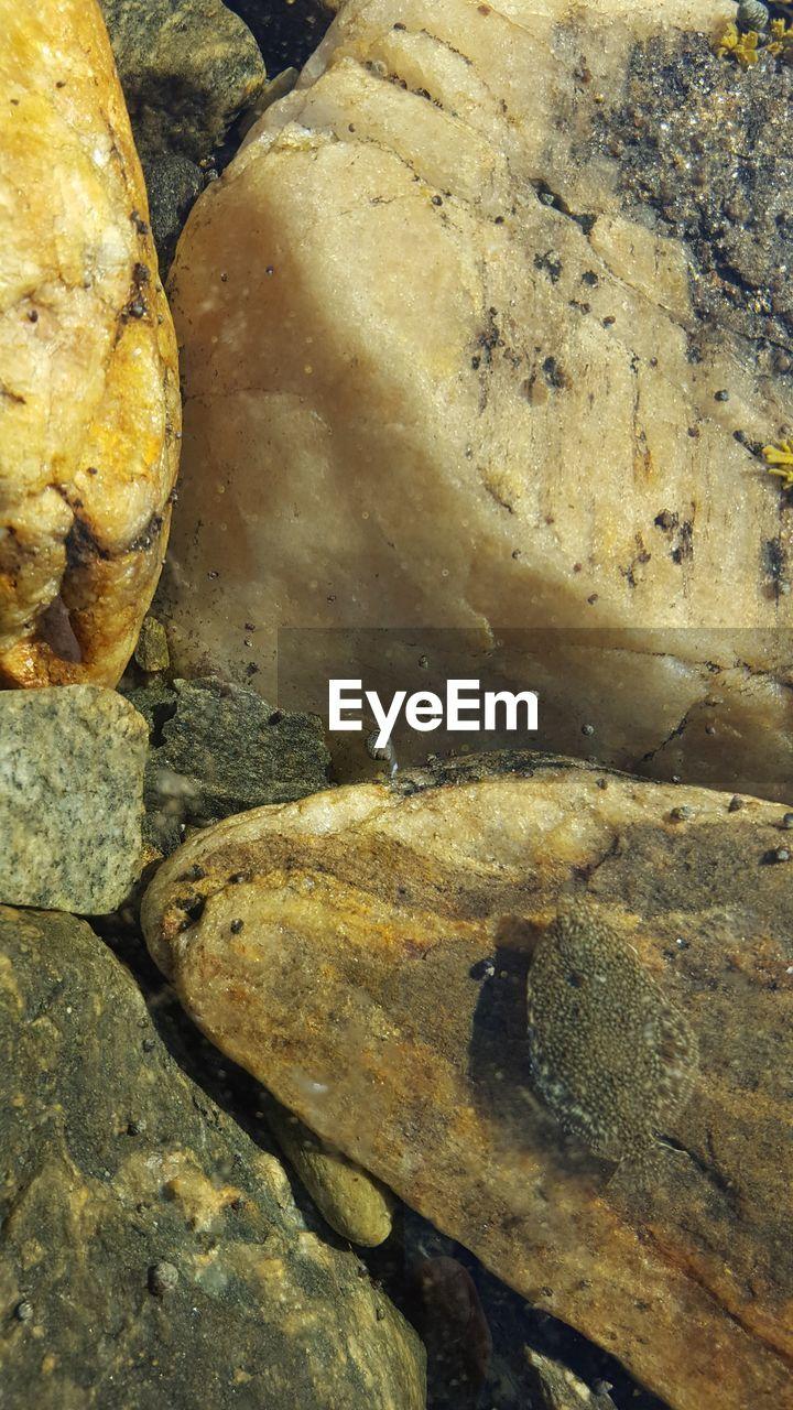 rock - object, no people, animal themes, outdoors, nature, day, one animal, animals in the wild, close-up, water