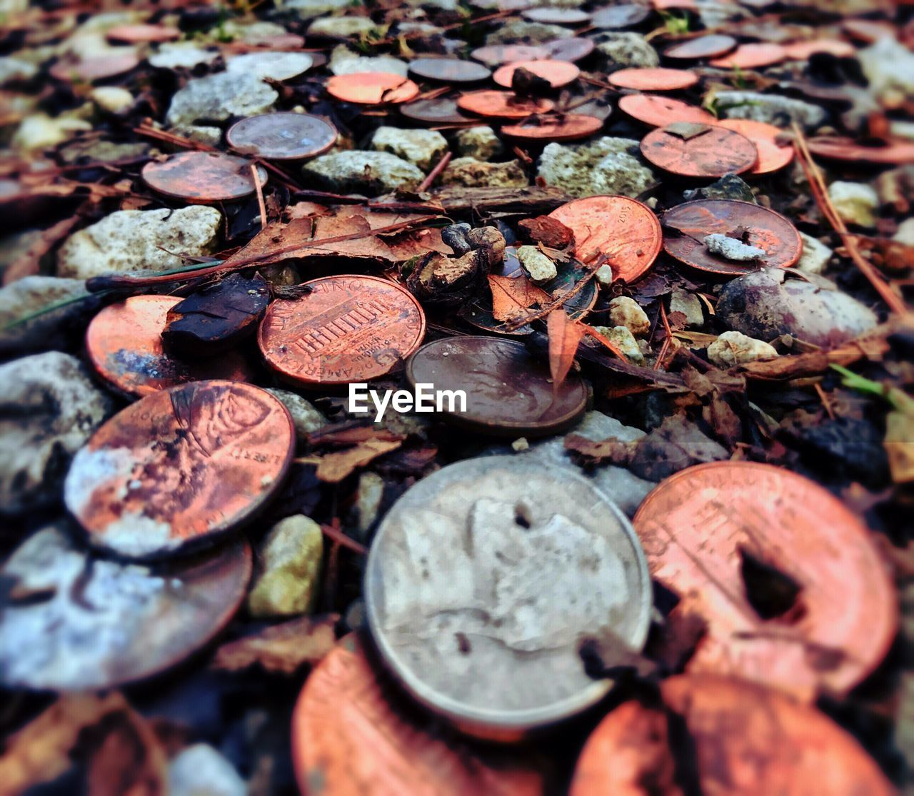 outdoors, no people, high angle view, day, close-up, coin, leaf, nature