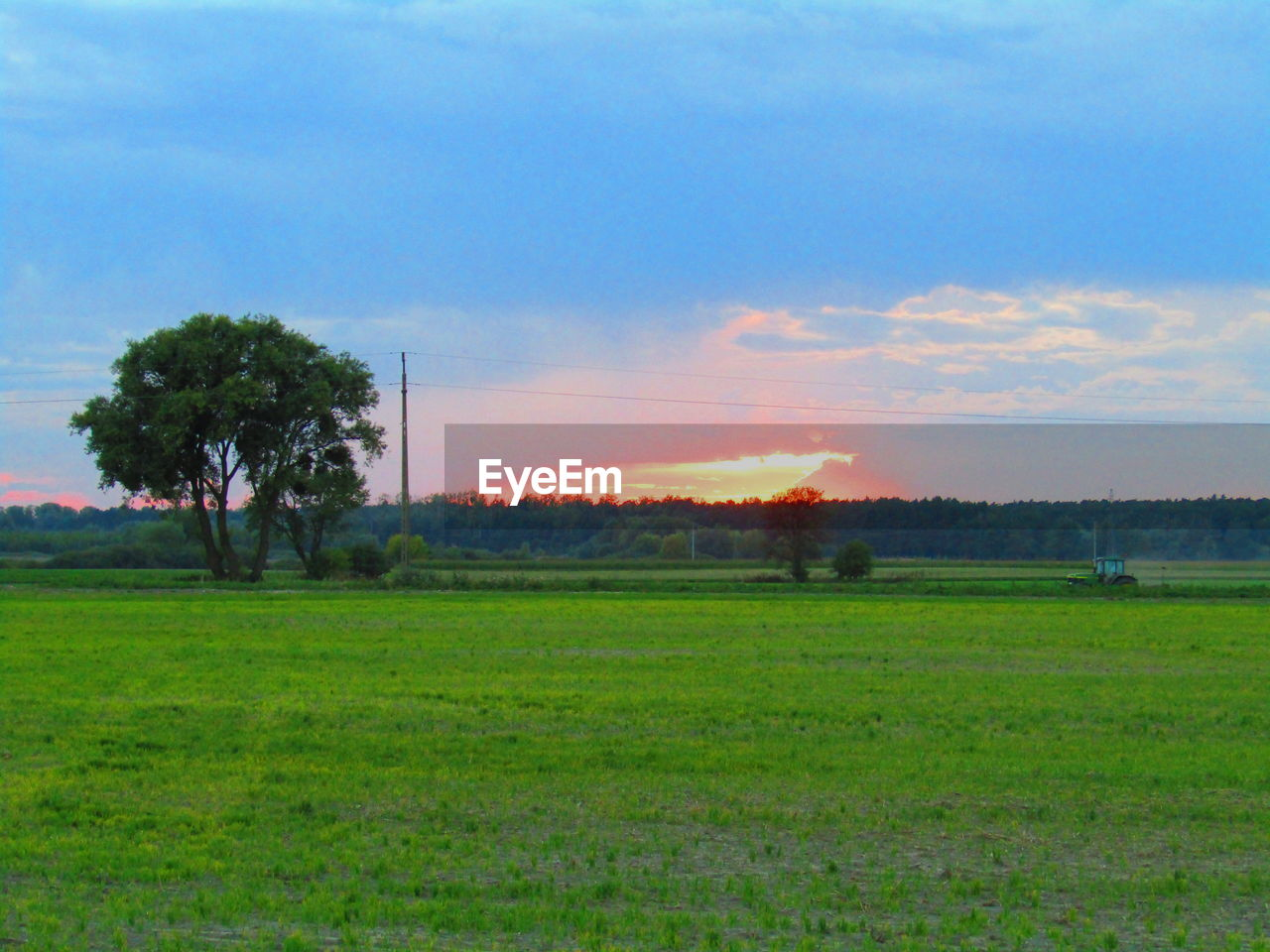 sky, plant, grass, field, landscape, tree, land, environment, green color, tranquil scene, tranquility, nature, scenics - nature, beauty in nature, cloud - sky, no people, outdoors, growth, day, sunset