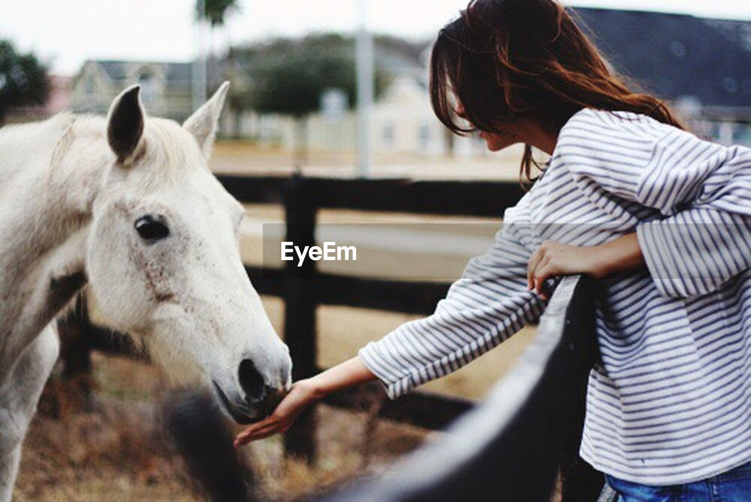 horse, domestic animals, livestock, women, one animal, one person, adults only, females, adult, rural scene, people, bonding, close-up, only women, one woman only, sky, outdoors, human hand, day, mammal, young adult, human body part