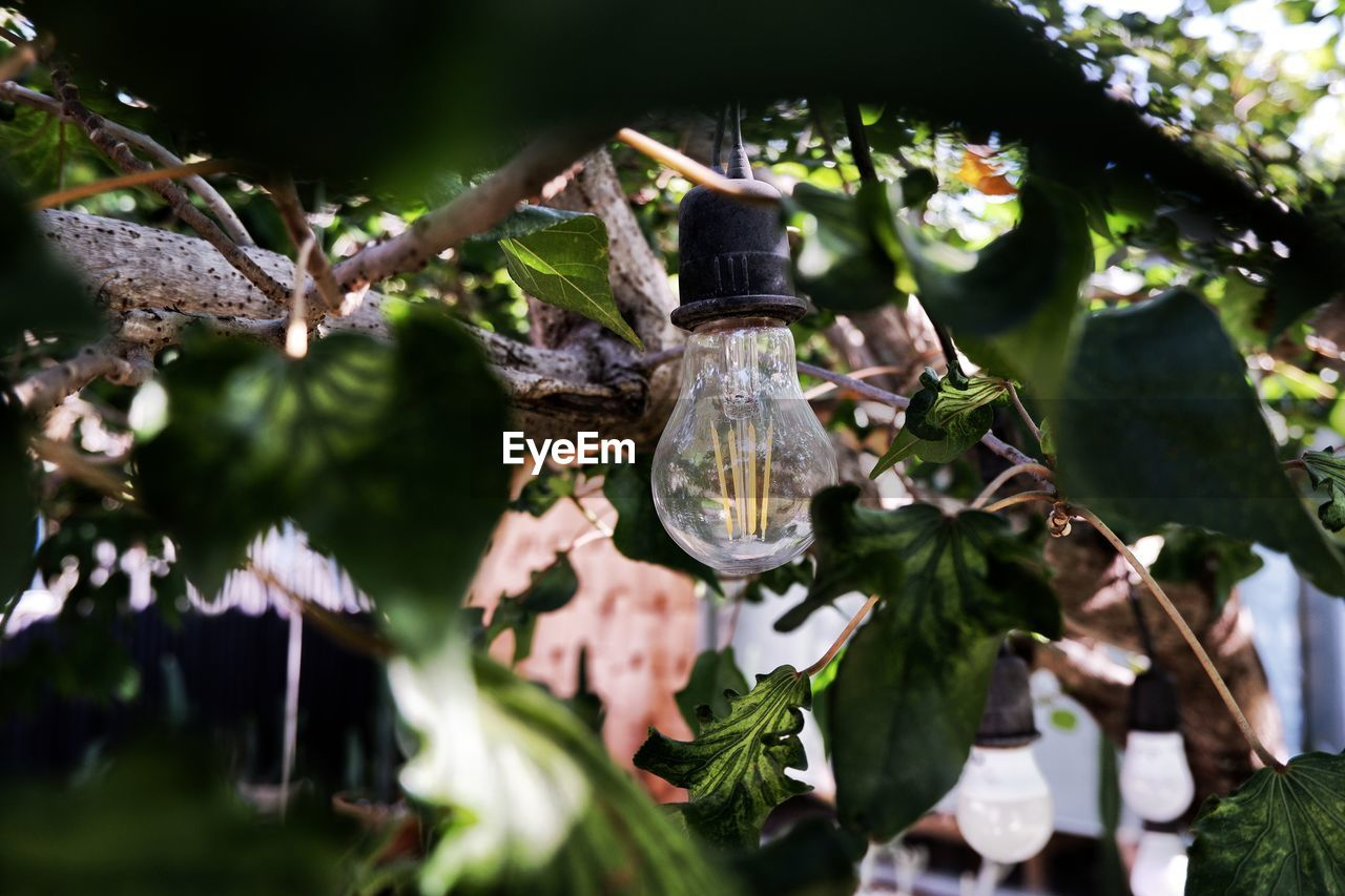 plant, selective focus, hanging, tree, no people, leaf, nature, plant part, close-up, day, focus on foreground, lighting equipment, outdoors, glass - material, branch, transparent, growth, sunlight, religion, green color