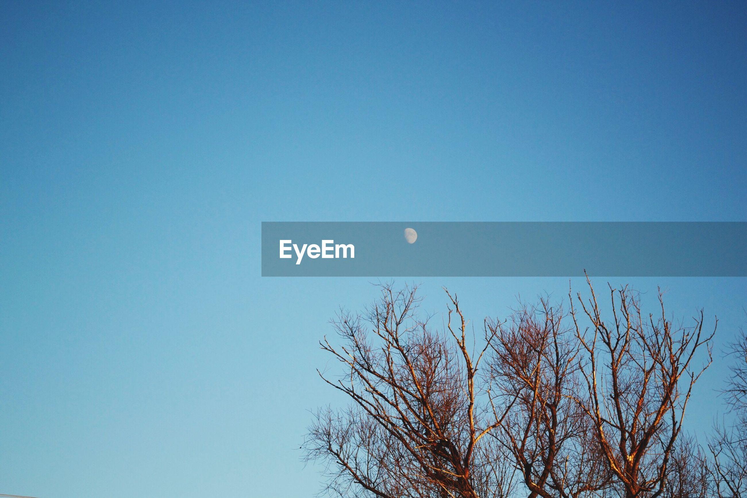 Moon over bare tree