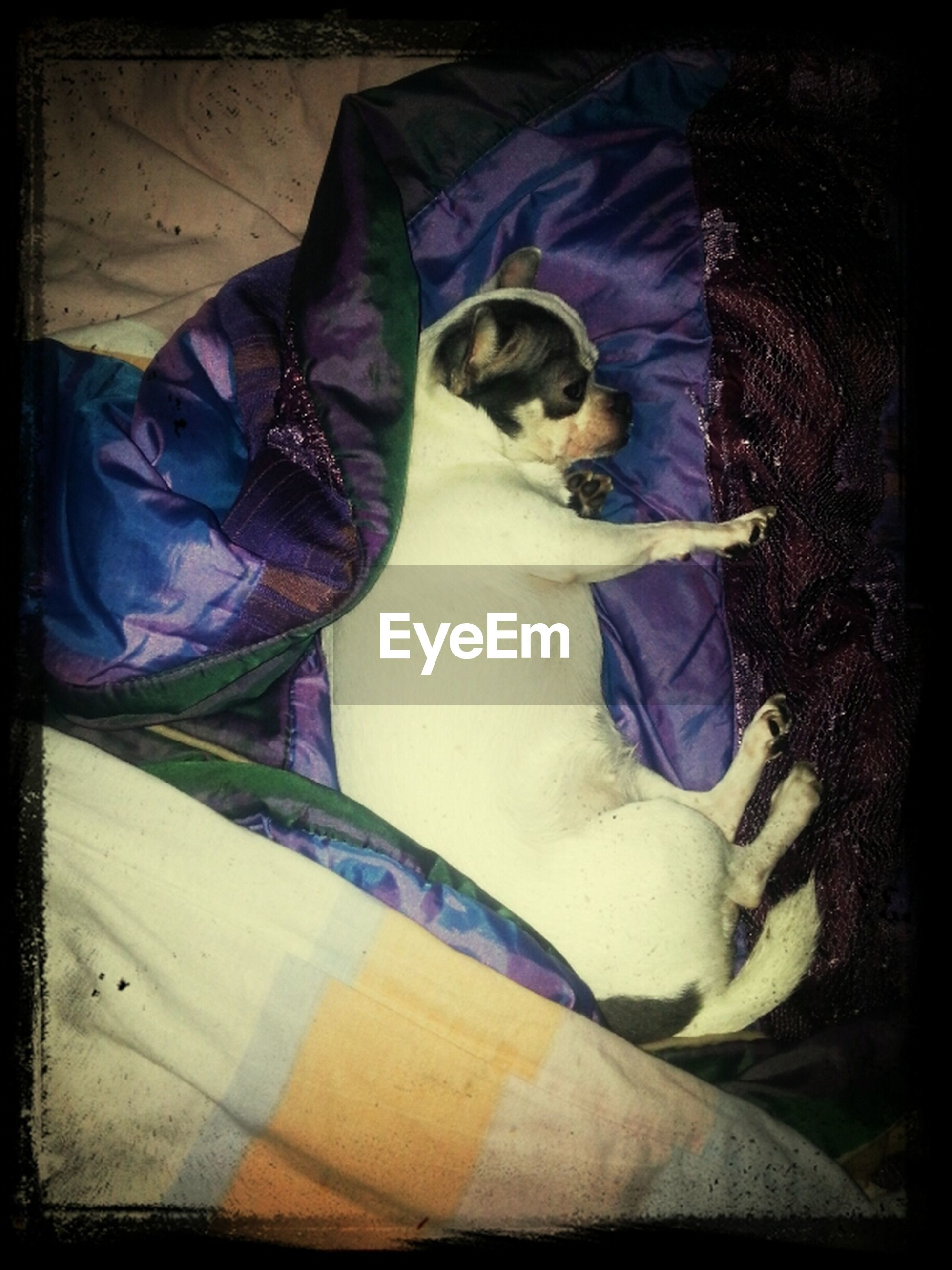 domestic animals, transfer print, animal themes, pets, one animal, auto post production filter, mammal, dog, relaxation, sleeping, indoors, full length, resting, lying down, men, lifestyles, casual clothing, sitting