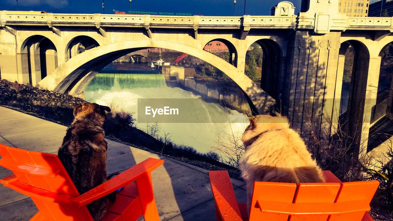 Rear view of dogs resting on adirondack chair against monroe street bridge