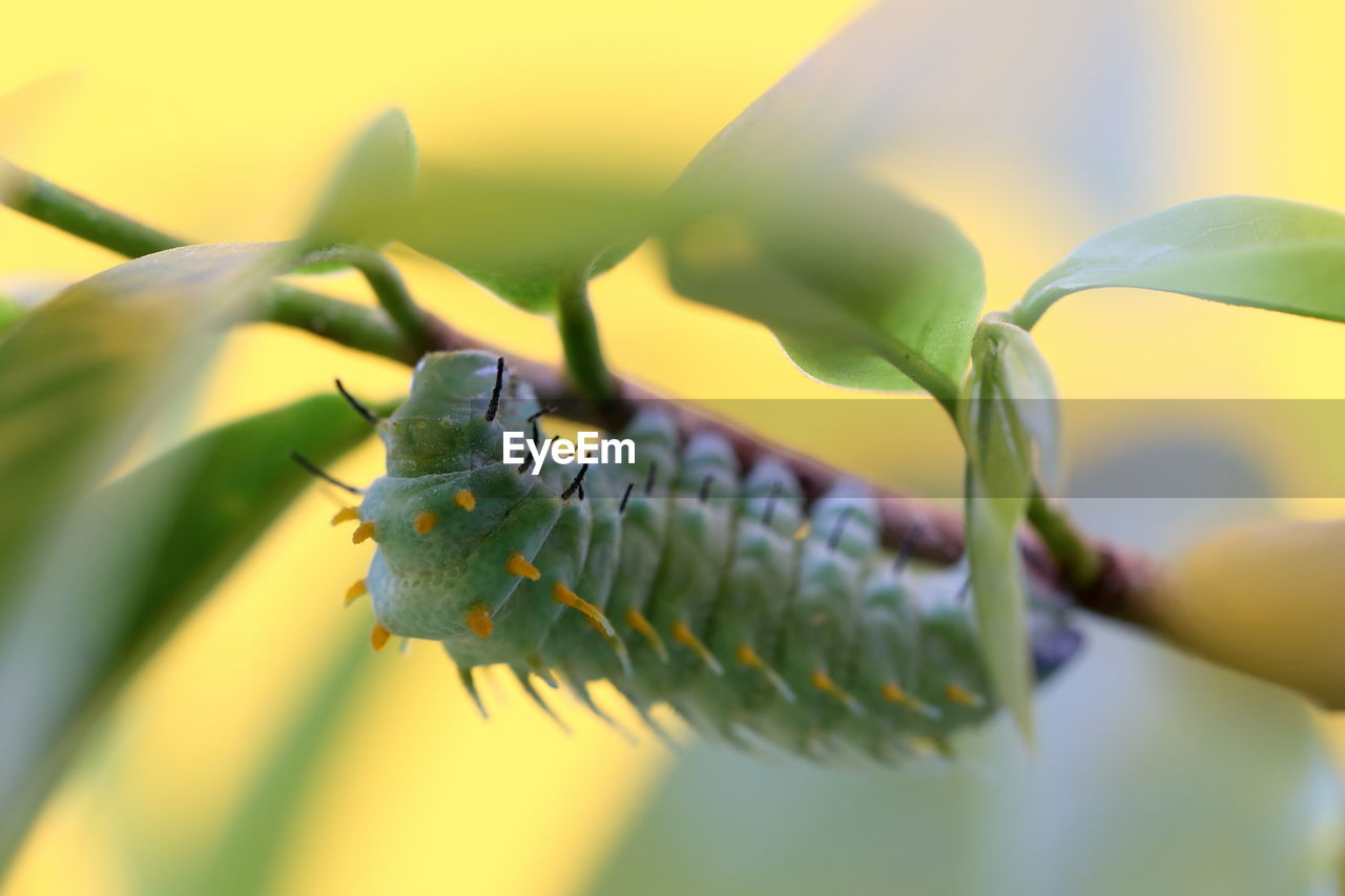 one animal, animals in the wild, animal themes, animal wildlife, invertebrate, close-up, animal, insect, selective focus, plant part, leaf, no people, green color, nature, day, plant, growth, beauty in nature, outdoors, animal body part