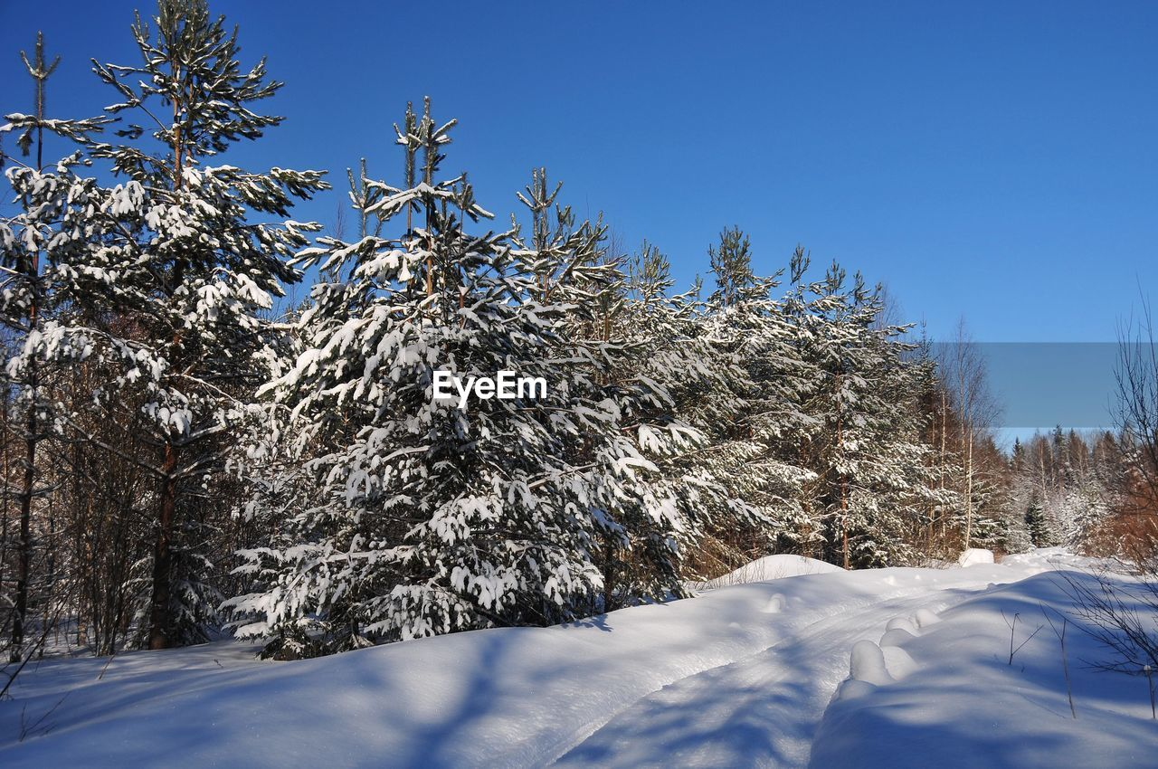 snow, cold temperature, winter, tree, plant, sky, beauty in nature, tranquility, clear sky, blue, nature, scenics - nature, day, no people, tranquil scene, growth, covering, sunlight, white color, outdoors, extreme weather, snowcapped mountain, coniferous tree