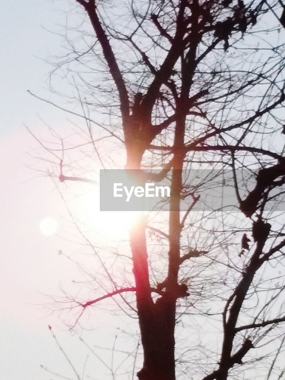 bare tree, sun, tree, branch, lens flare, nature, beauty in nature, winter, sunlight, silhouette, outdoors, cold temperature, sky, tranquility, low angle view, day, no people, snow, scenics, landscape, sunset, close-up