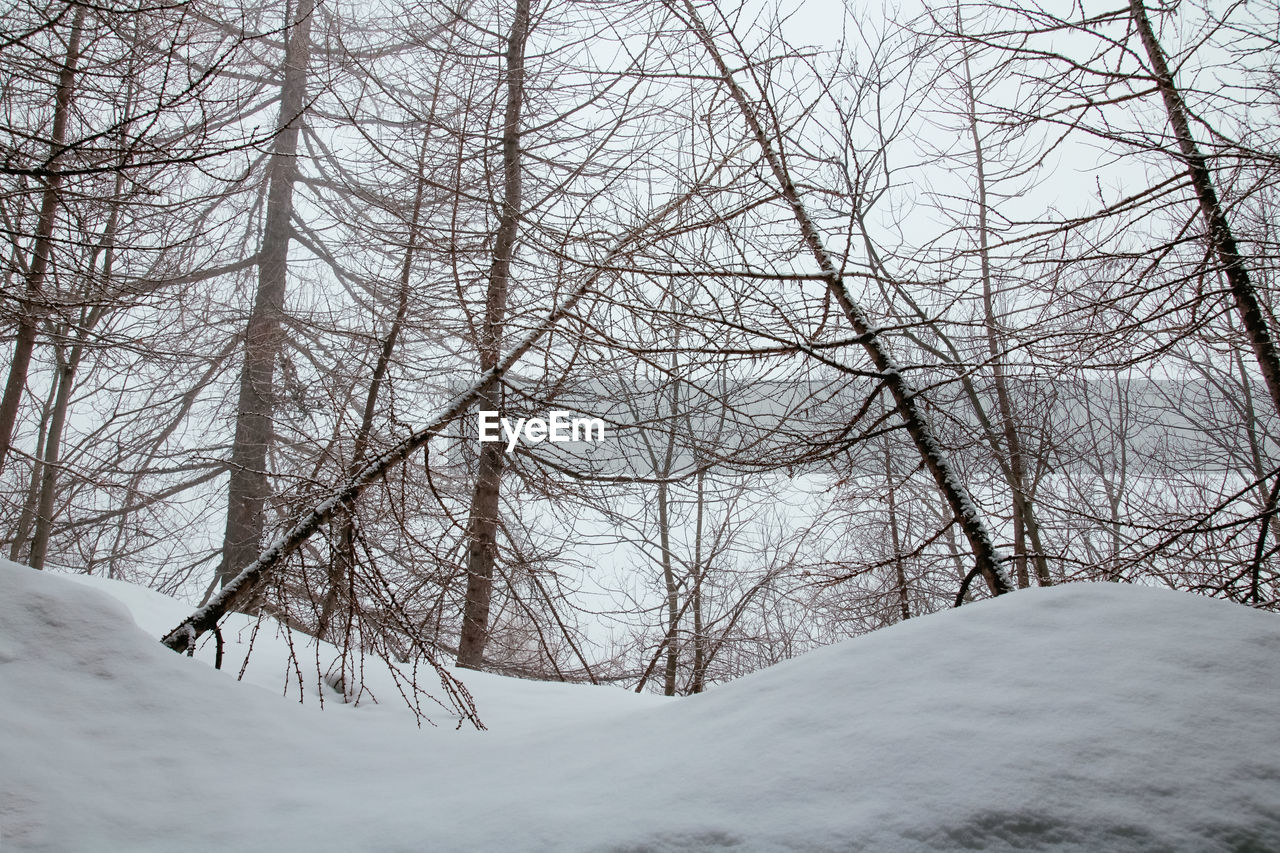 snow, cold temperature, winter, tree, bare tree, branch, plant, tranquility, nature, land, covering, white color, beauty in nature, scenics - nature, no people, environment, day, non-urban scene, tranquil scene, outdoors, extreme weather, snowcapped mountain, snowing