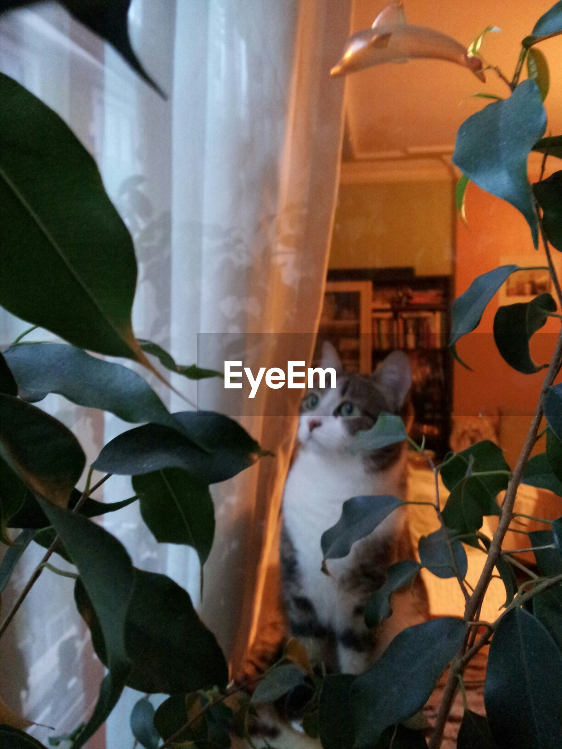 pets, domestic animals, animal themes, domestic cat, one animal, cat, mammal, feline, indoors, relaxation, plant, whisker, home interior, resting, potted plant, window, sitting, no people, front or back yard, lying down