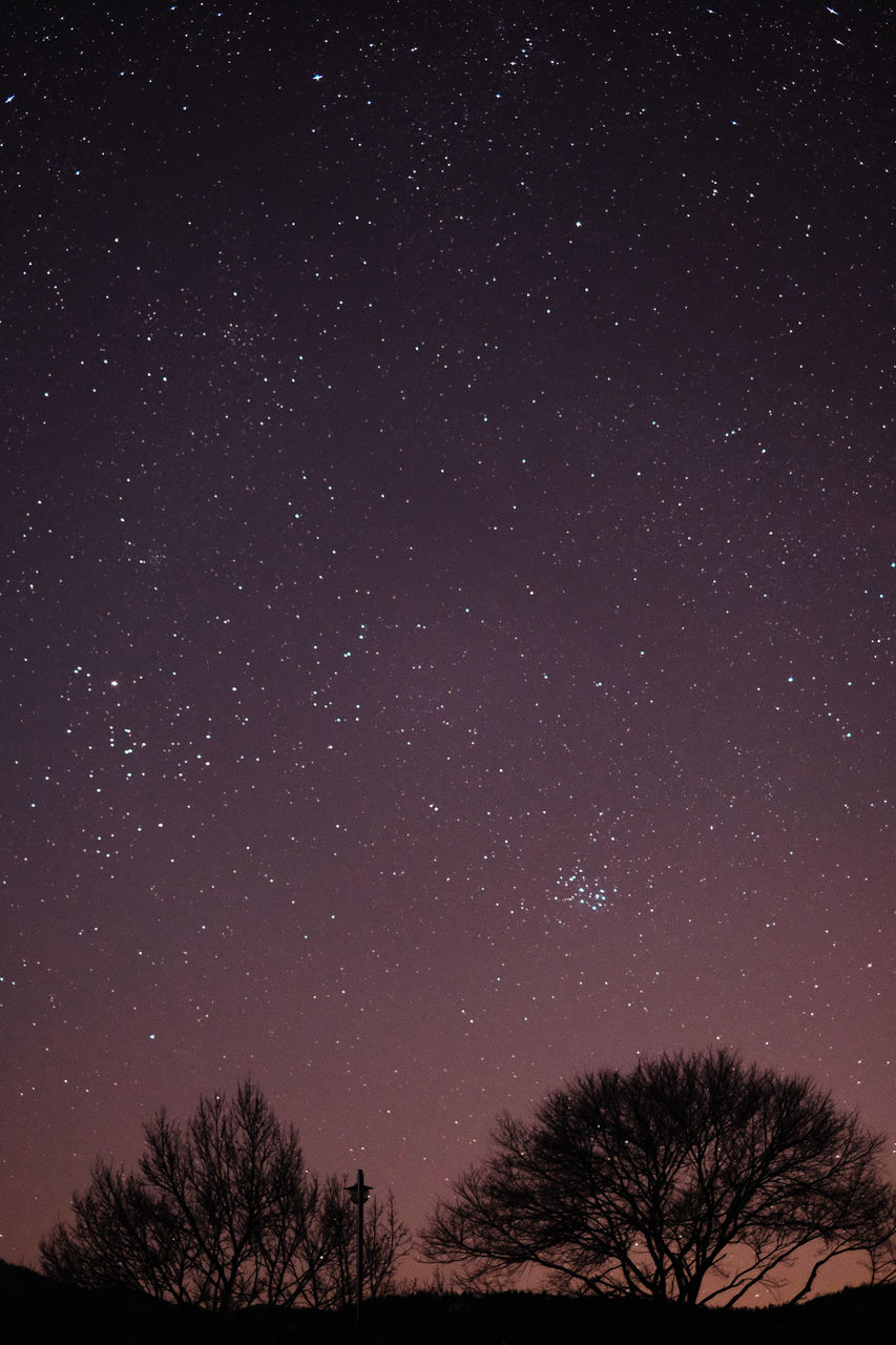 star - space, sky, space, astronomy, tree, night, scenics - nature, beauty in nature, low angle view, nature, plant, star, no people, tranquil scene, tranquility, silhouette, star field, galaxy, idyllic, infinity, space and astronomy