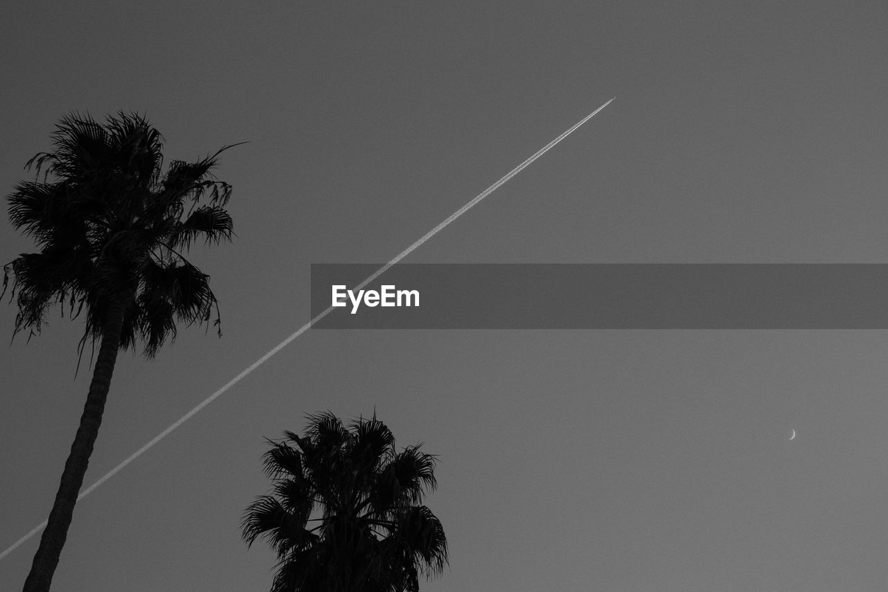 LOW ANGLE VIEW OF SILHOUETTE PALM TREE AGAINST SKY