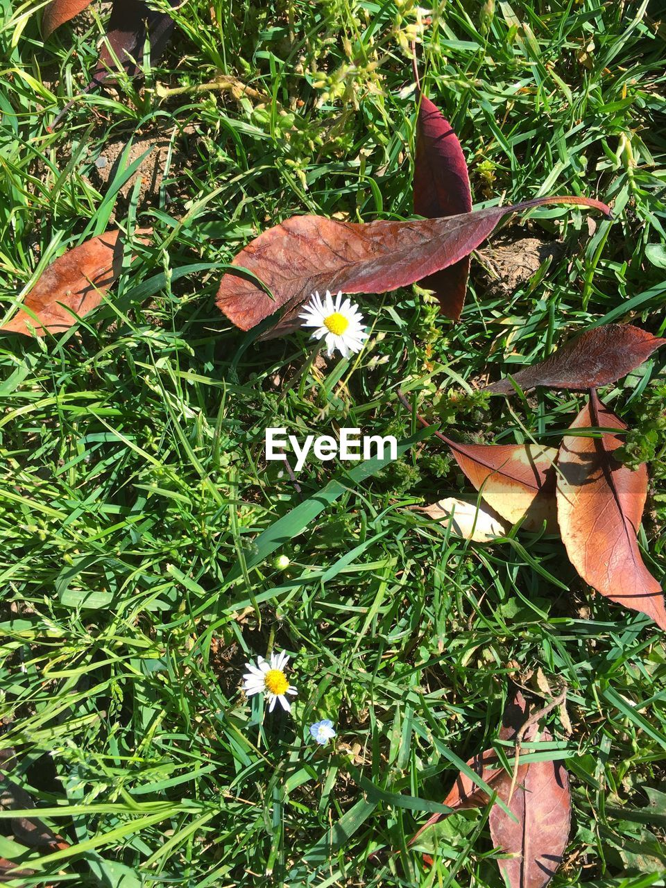 grass, growth, nature, no people, green color, plant, day, leaf, outdoors, flower, field, beauty in nature, close-up, fragility, flower head, animal themes, freshness