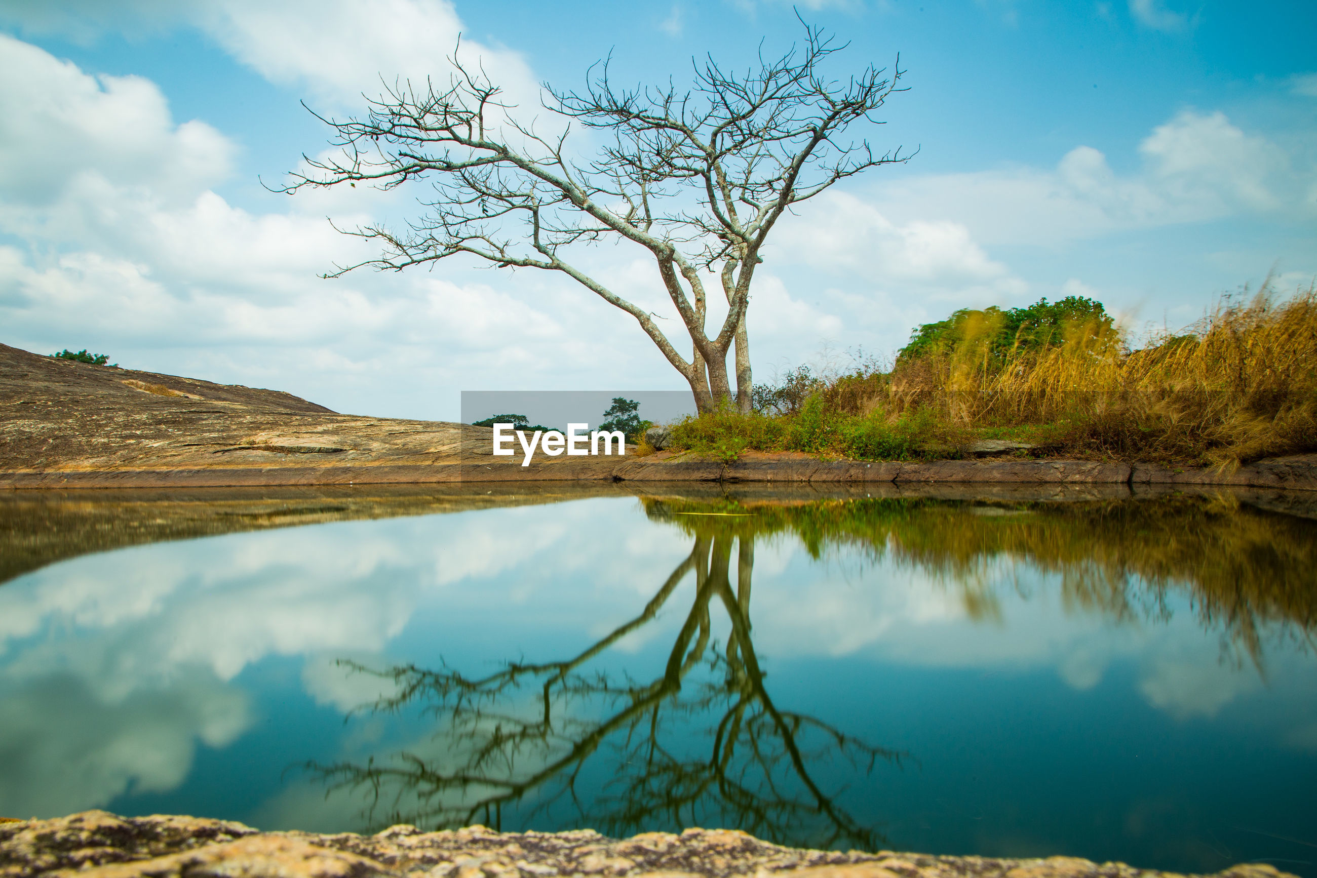SCENIC VIEW OF LAKE BY TREE AGAINST SKY
