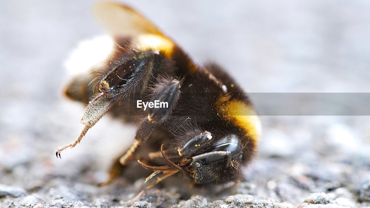 animal themes, animal, animals in the wild, one animal, animal wildlife, invertebrate, insect, close-up, day, bee, focus on foreground, selective focus, nature, no people, arthropod, outdoors, zoology, land, solid, animal body part, animal eye
