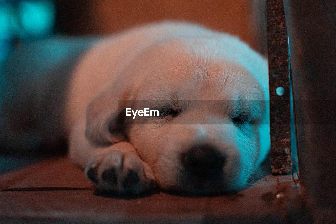 Dog sleeping at night
