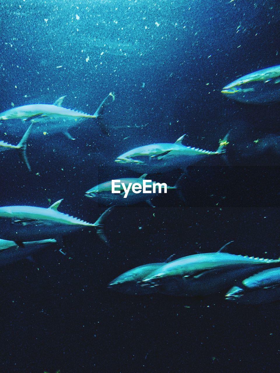 Tunas Swimming In Aquarium